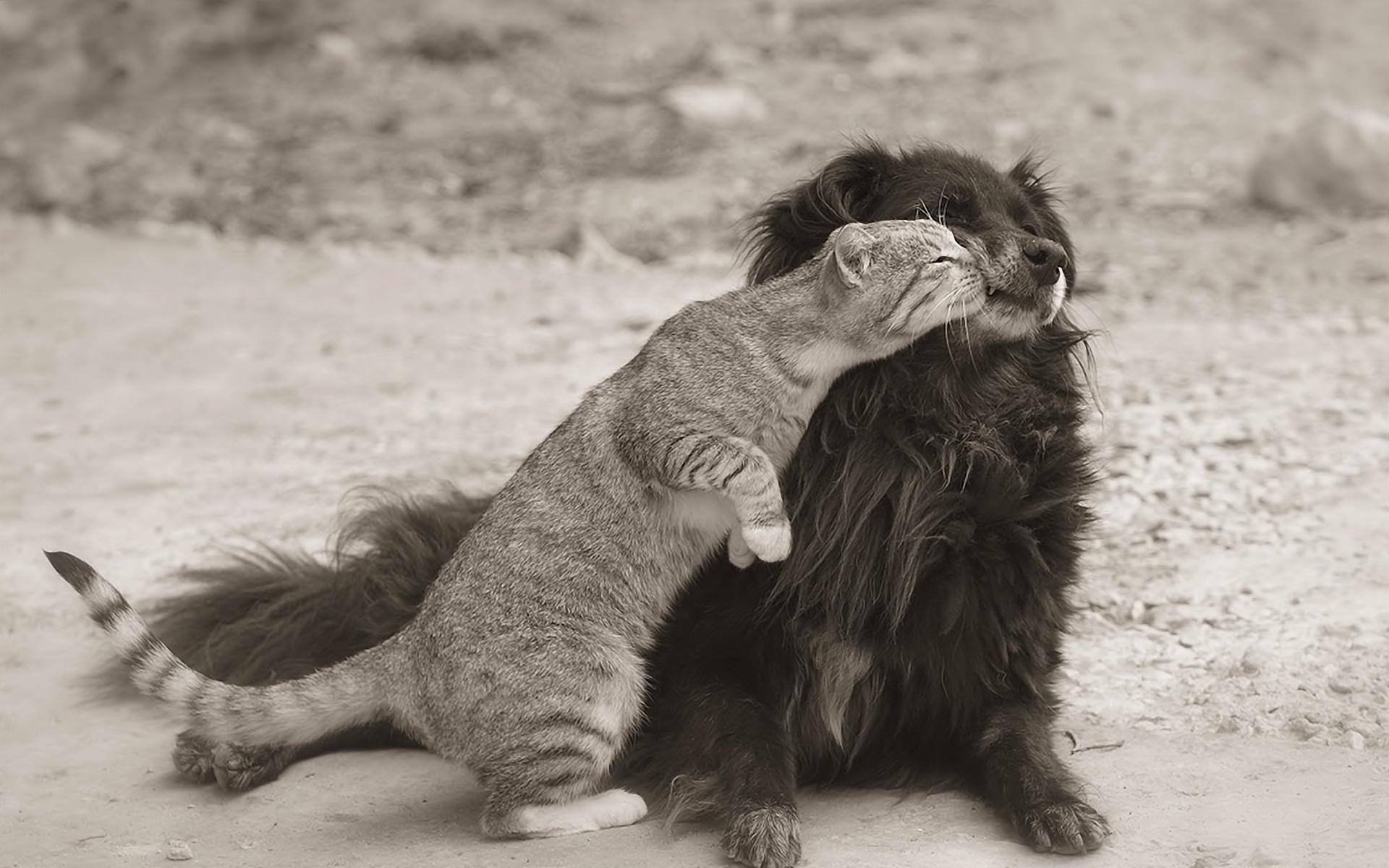 Картинки с животными с надписью про любовь