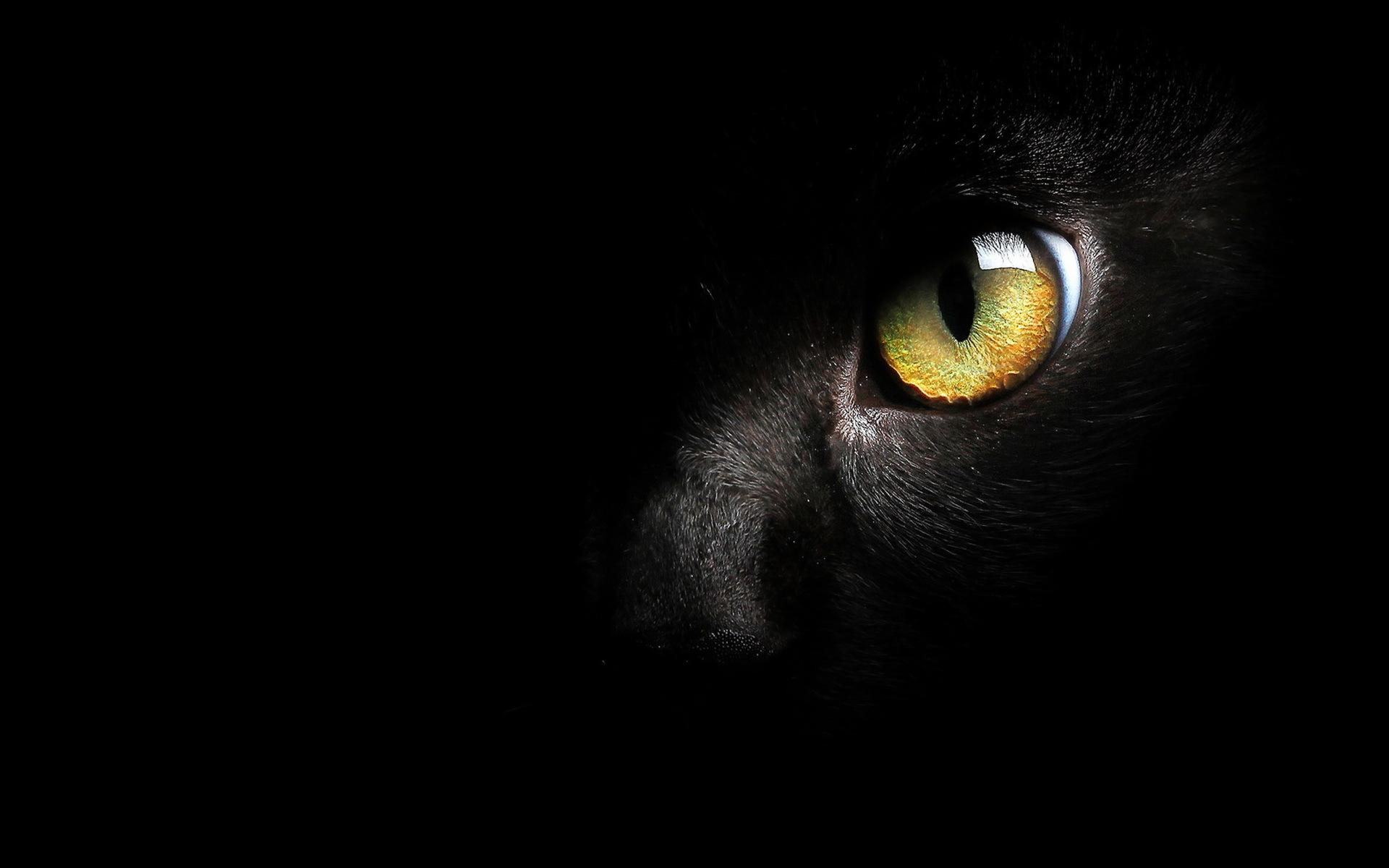 обои на рабочий стол глаза кошки на темном фоне № 237933 загрузить