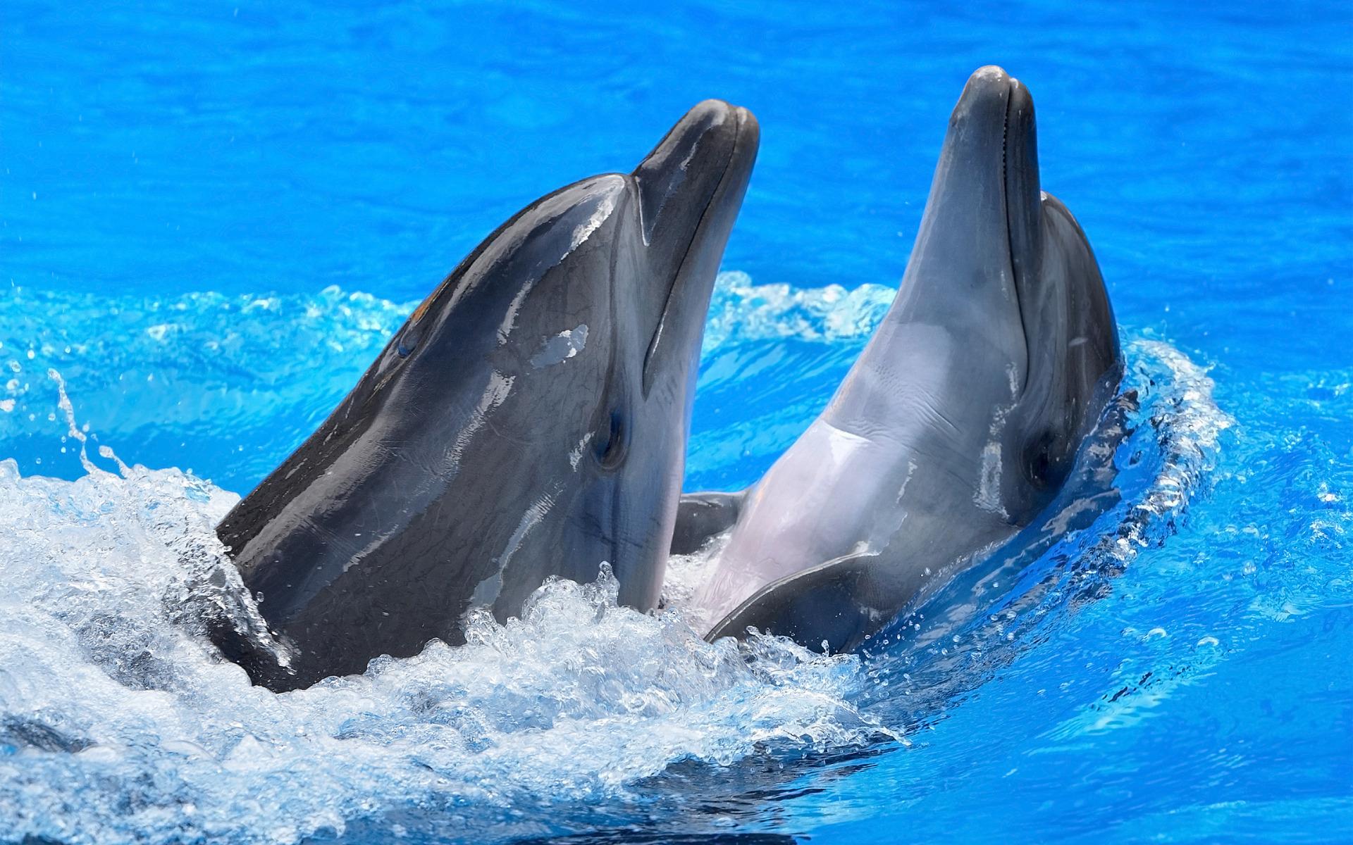 как картинки для стола дельфины избежания его