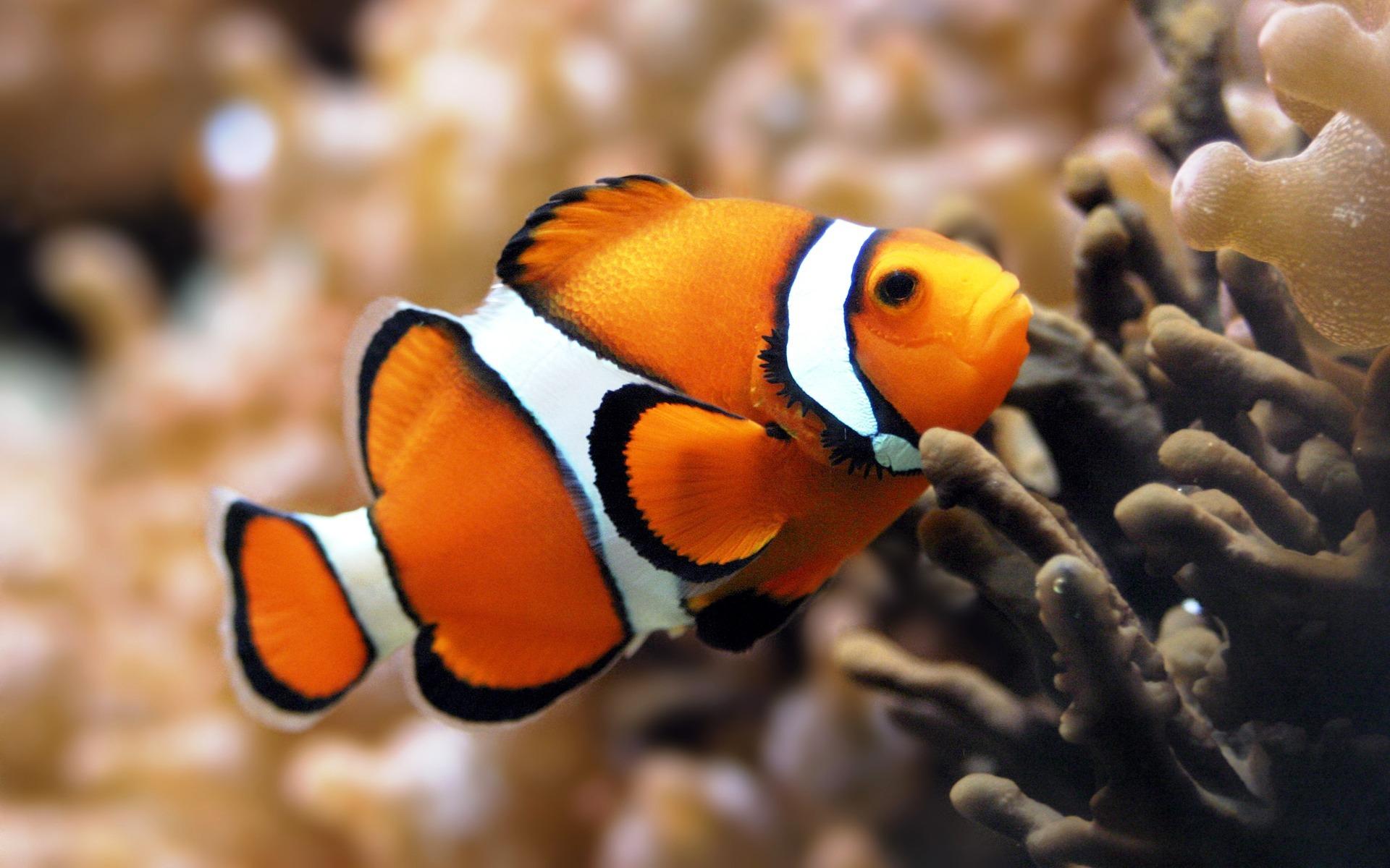 красивые рыбы с названиями фото стоит лишний раз