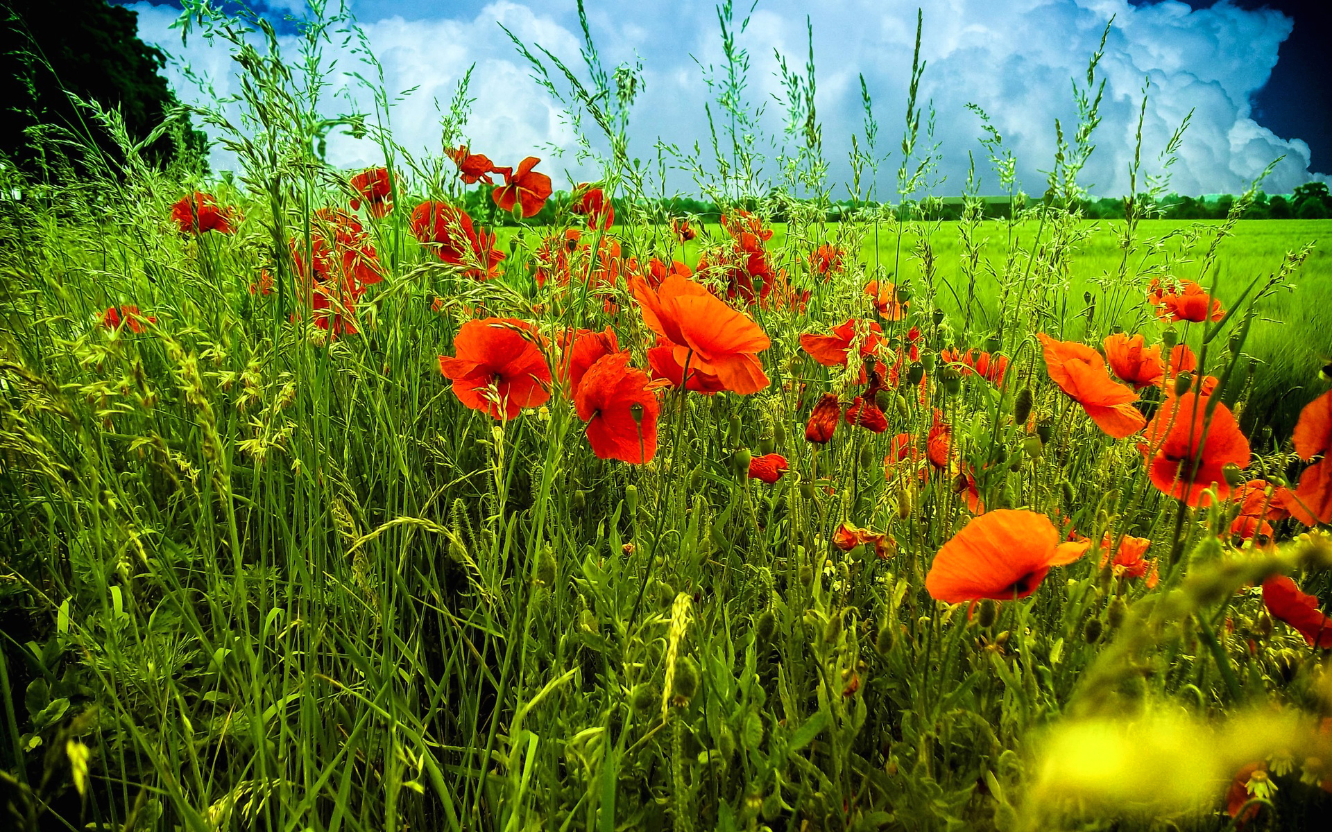 Красивые картинки с осенними цветами и добрым утром этого выбирают