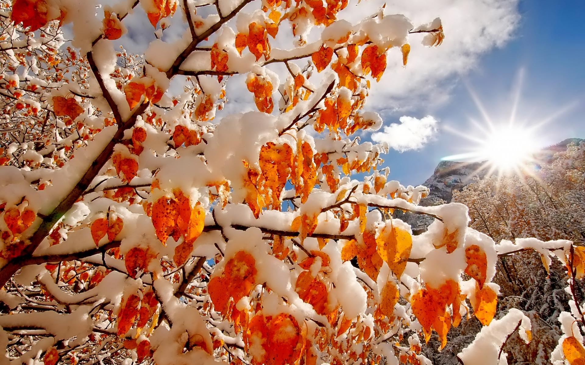 Обои на рабочий стол природа осень и зима цветы