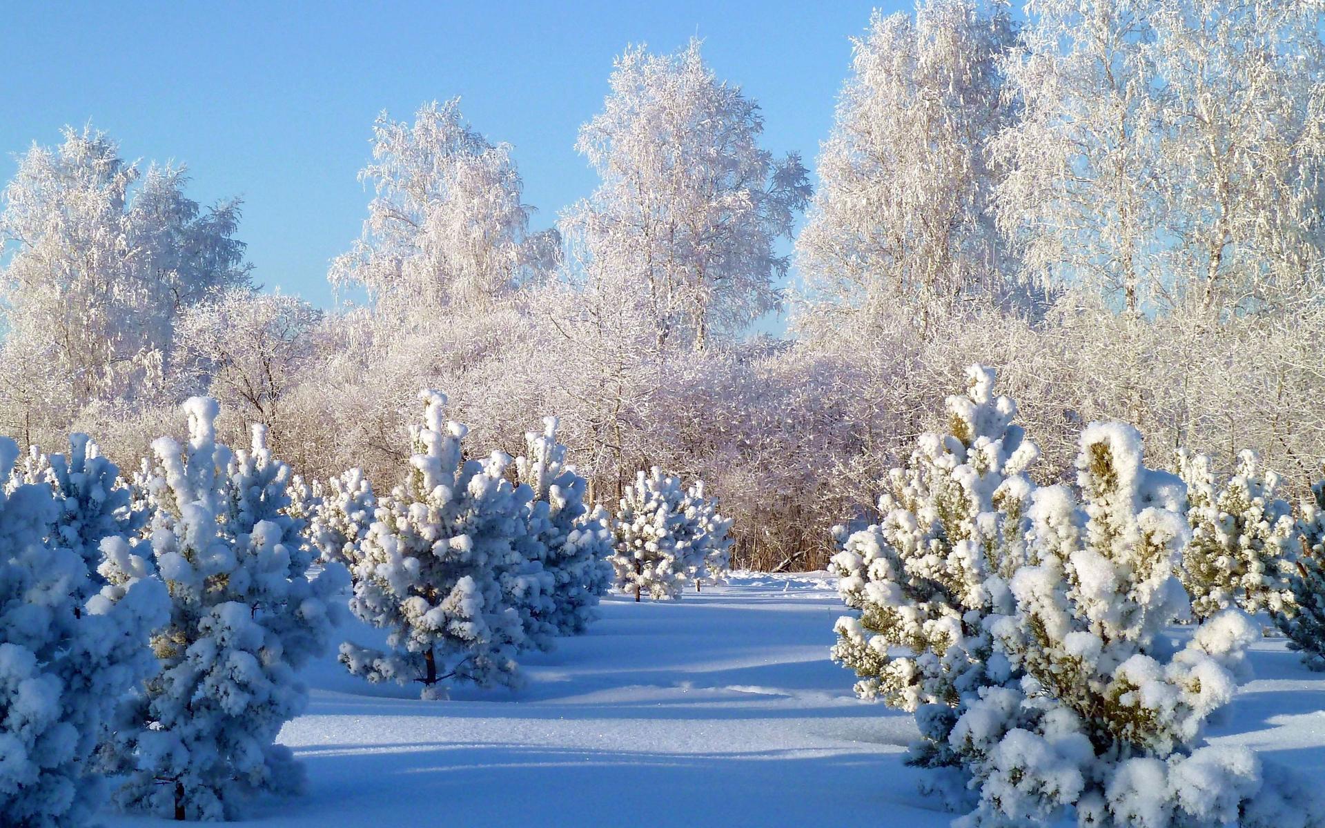 месторождение признали открытки зимняя природа ансамбля