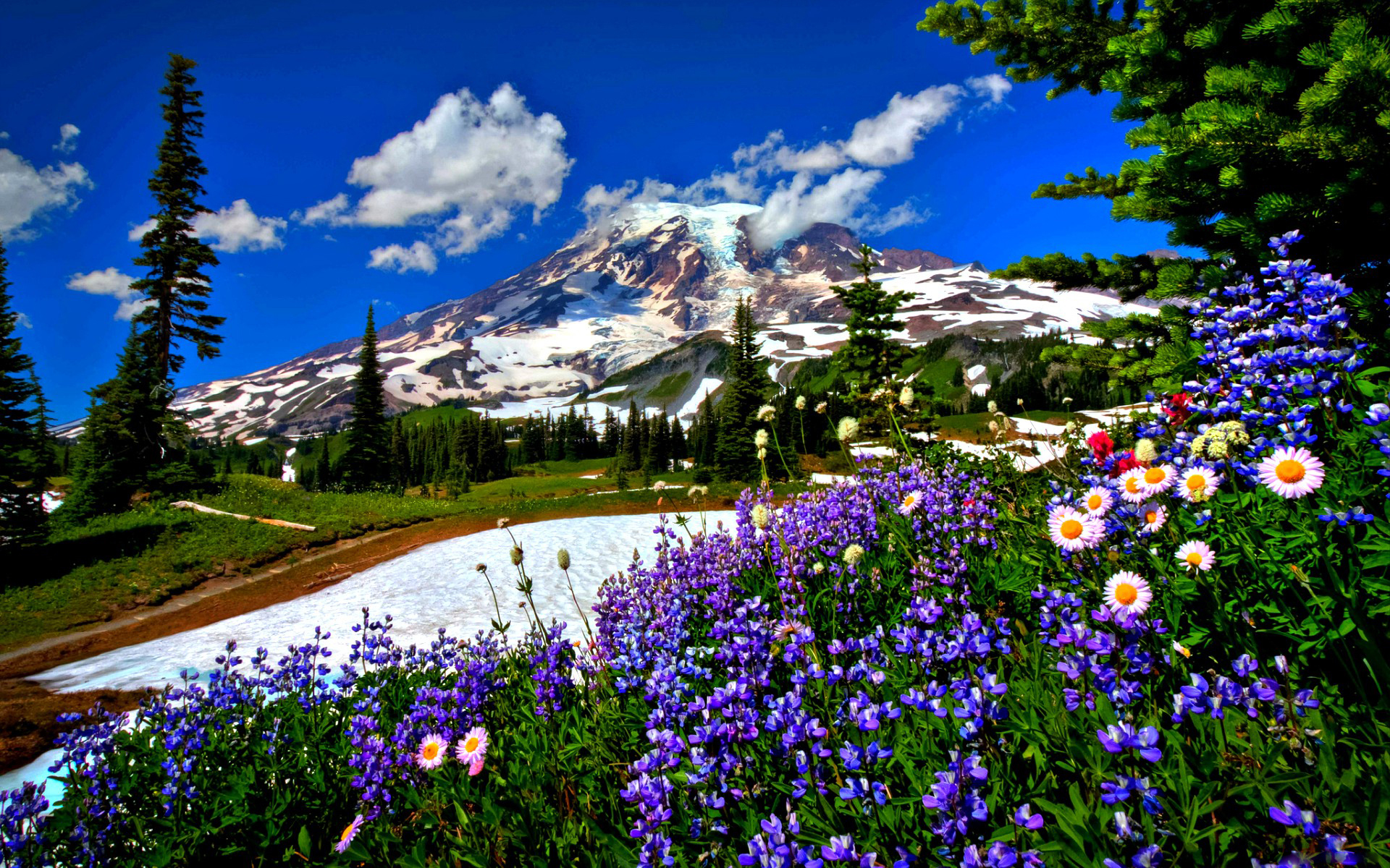 Красота цветов фото высокого разрешения