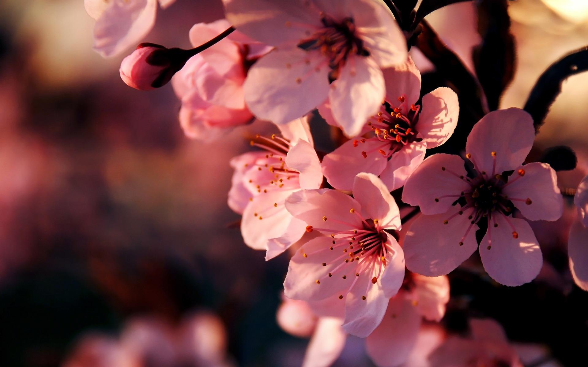 Картинка на компьютер на рабочий стол весна, день