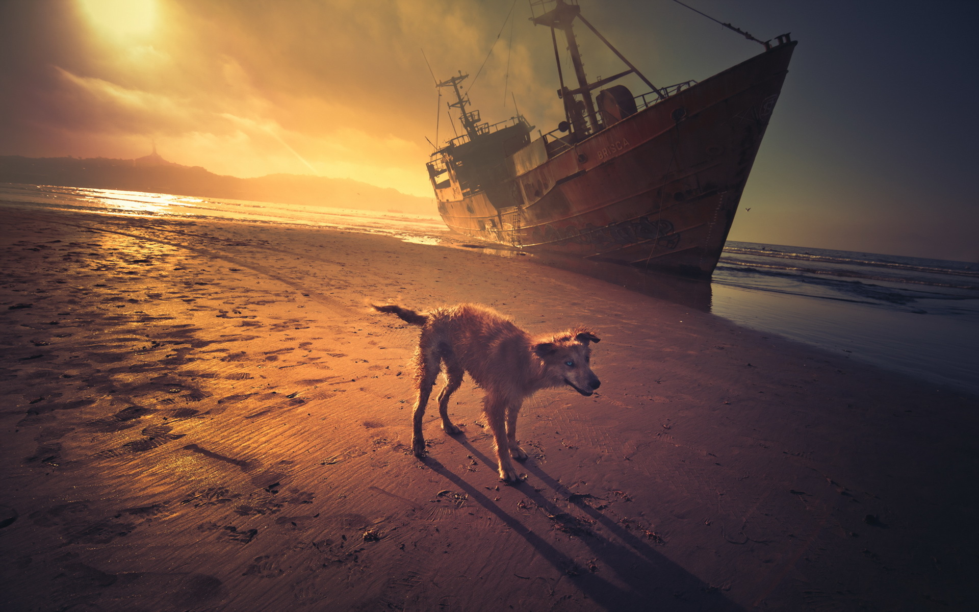 Собака на фоне заката  № 2038656 бесплатно