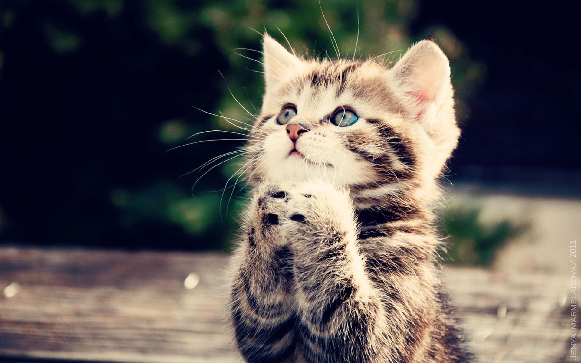 тюлем красивые картинки на телефон со смешными кошками думай