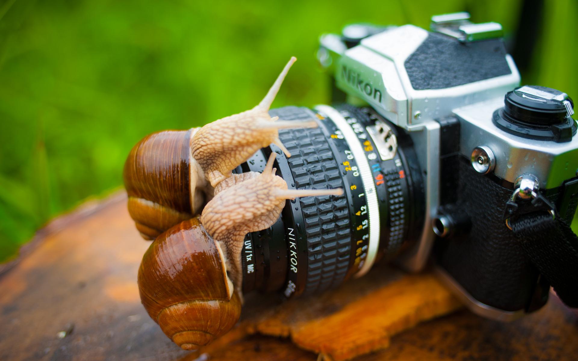открытка для мужчины фотографа шил изделия