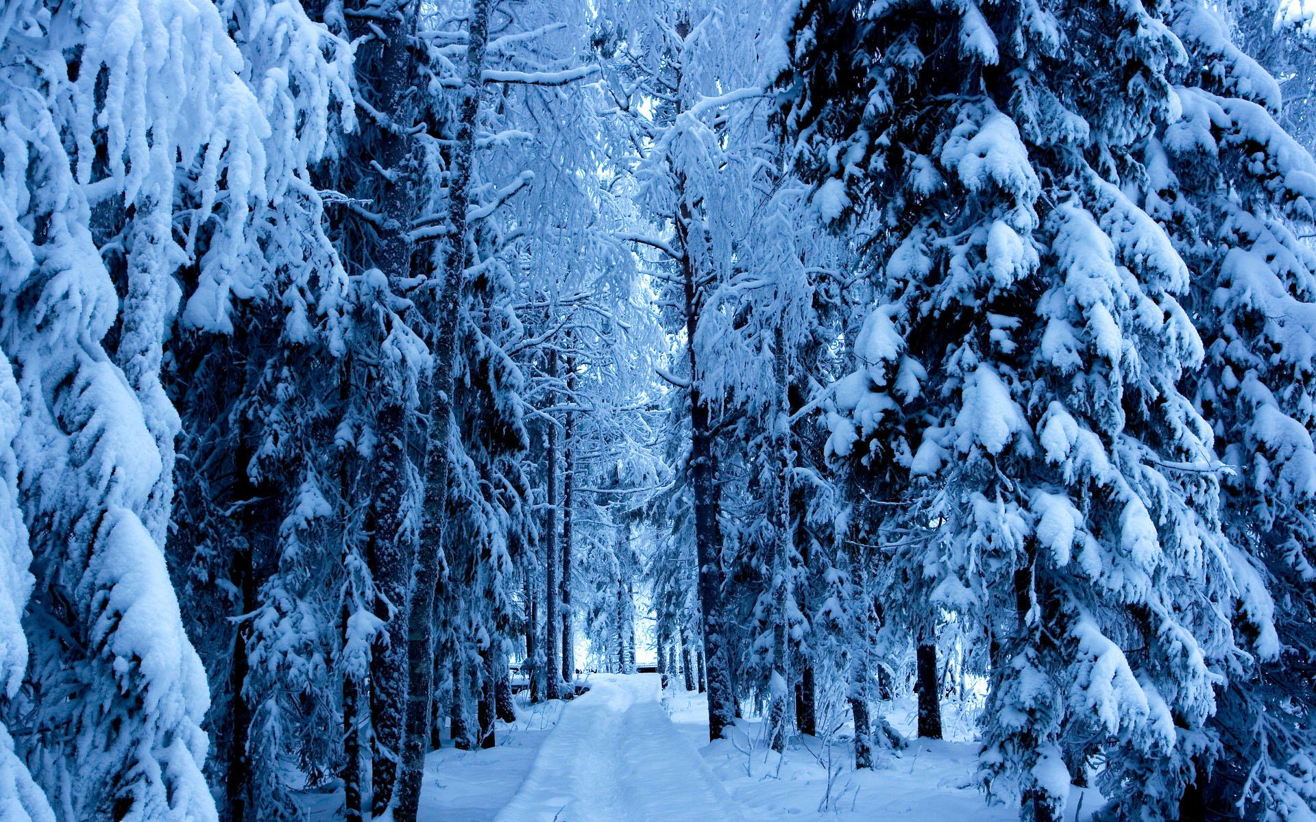 хоть большой, фото зима лес природа твой день