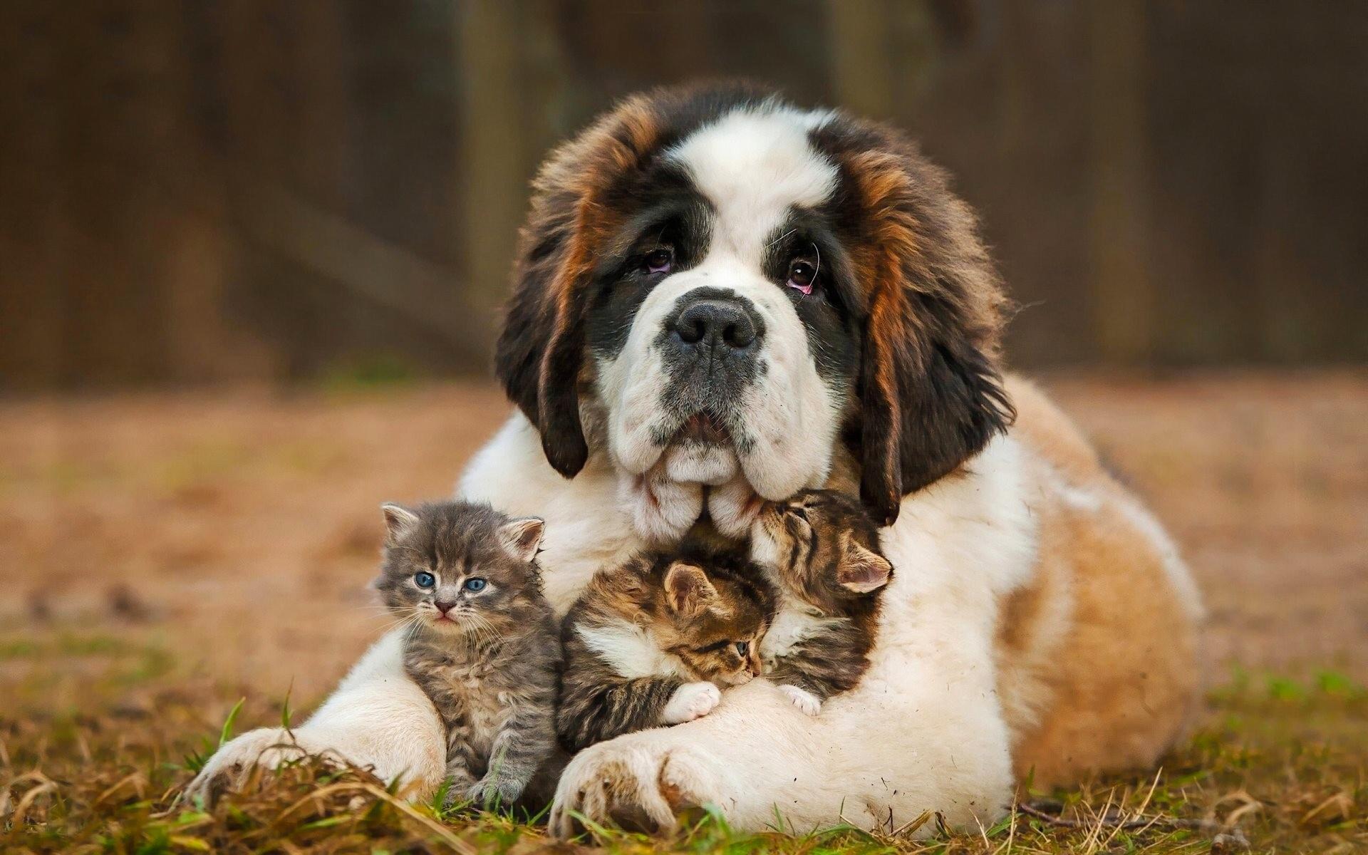 Смешные фото с домашними животными в хорошем качестве
