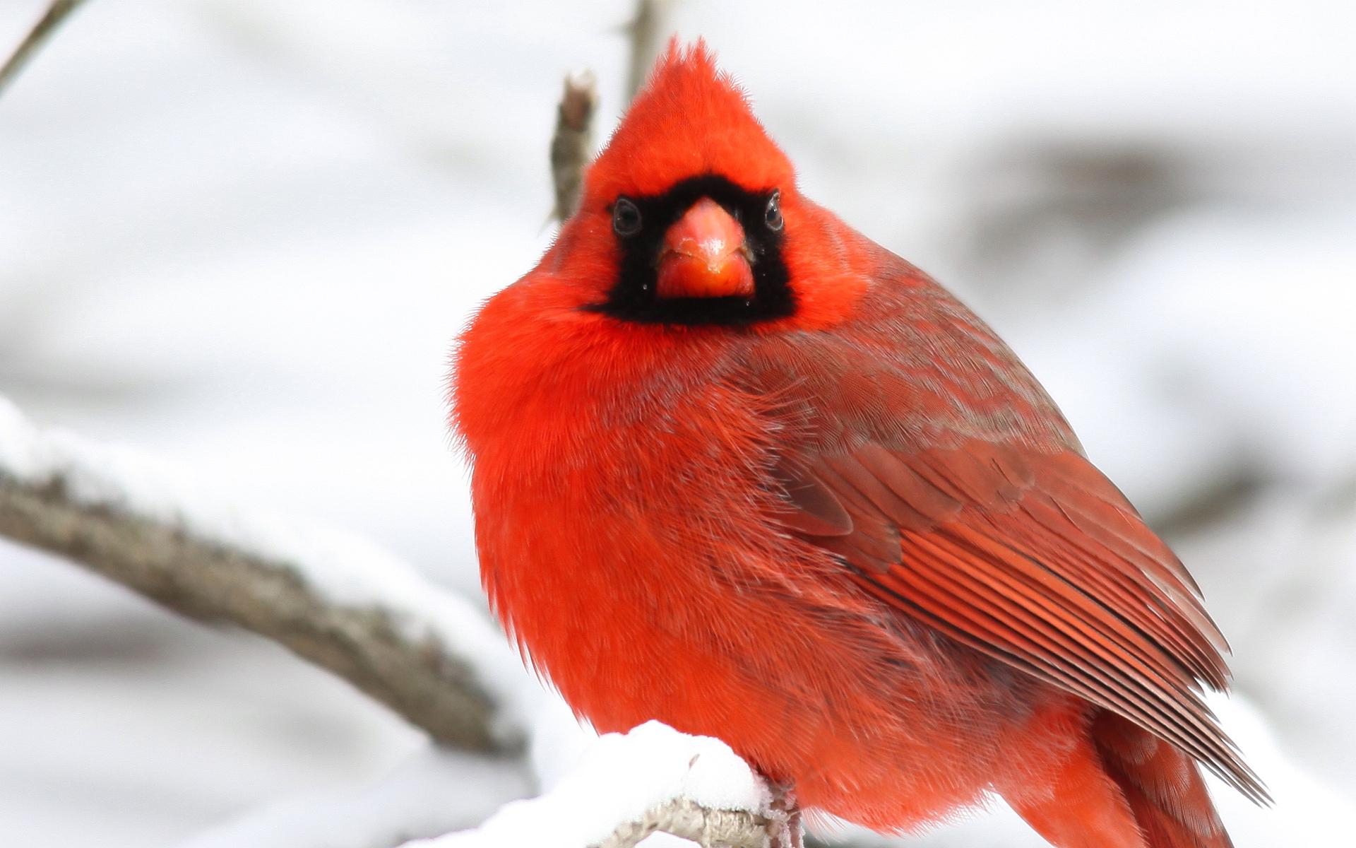 птички на снегу  № 101518 бесплатно