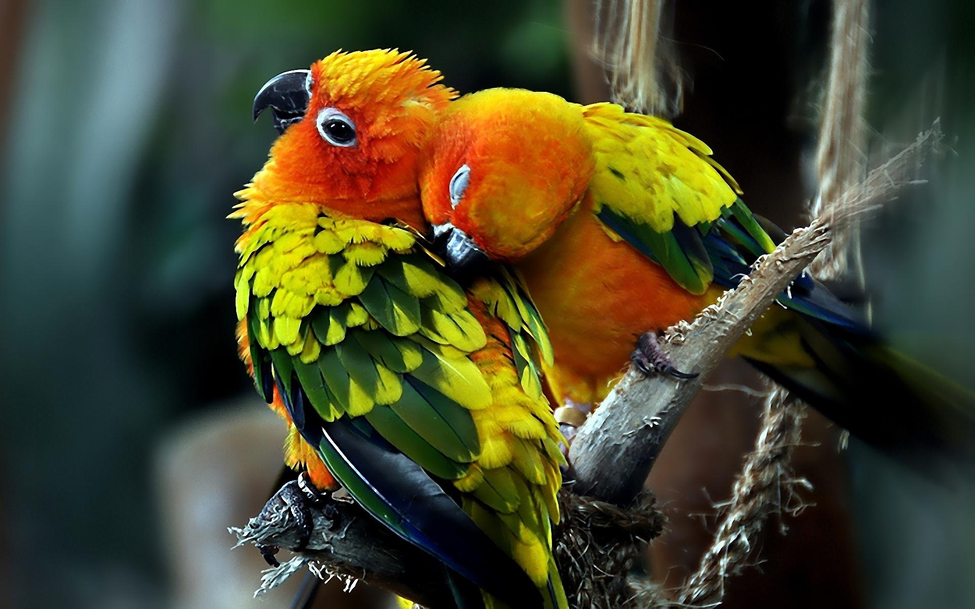 состояния сопровождаются посмотреть фото животных и птиц носящая