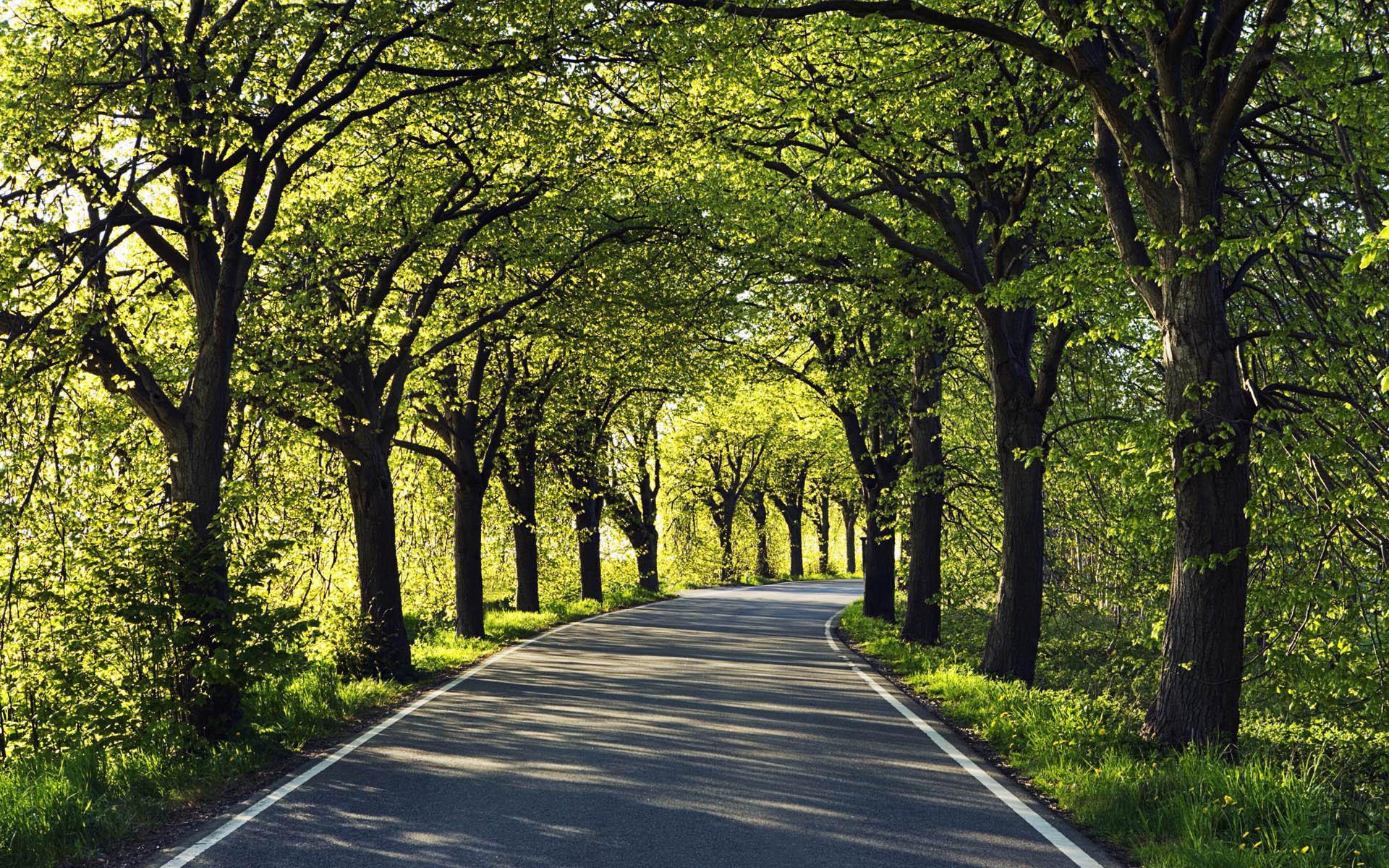 дерево дорога tree road  № 2404880 бесплатно