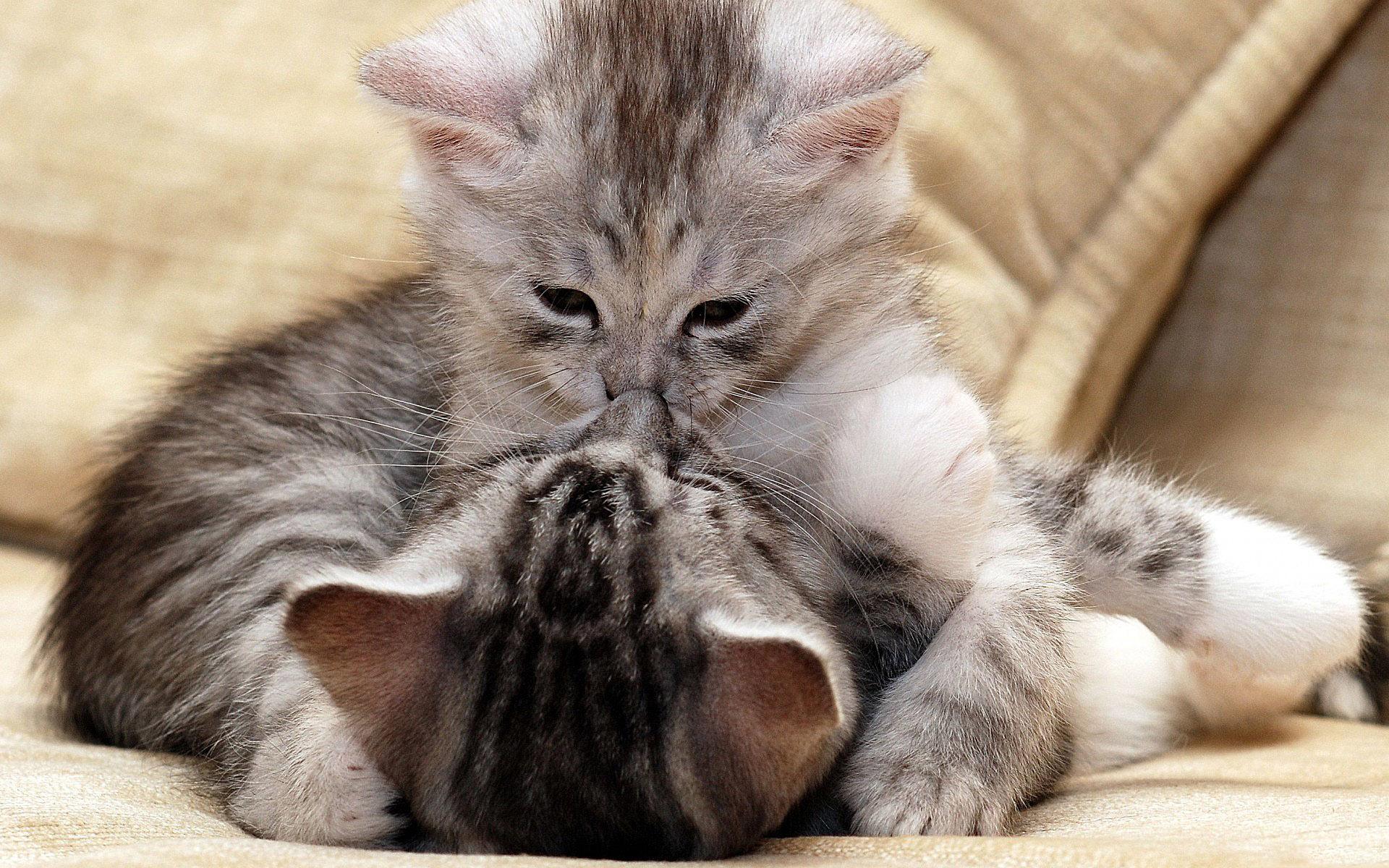 Голыми, кошки и котята картинки красивые