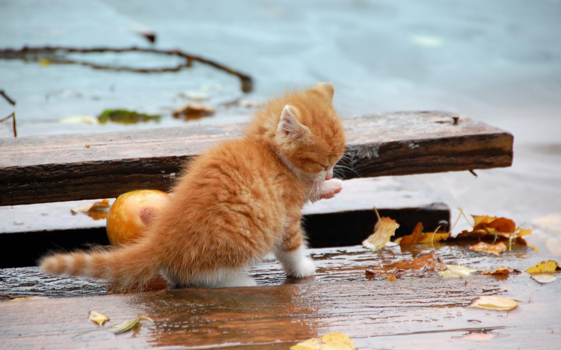 снять верхний дождливая осень прикольные картинки каждый