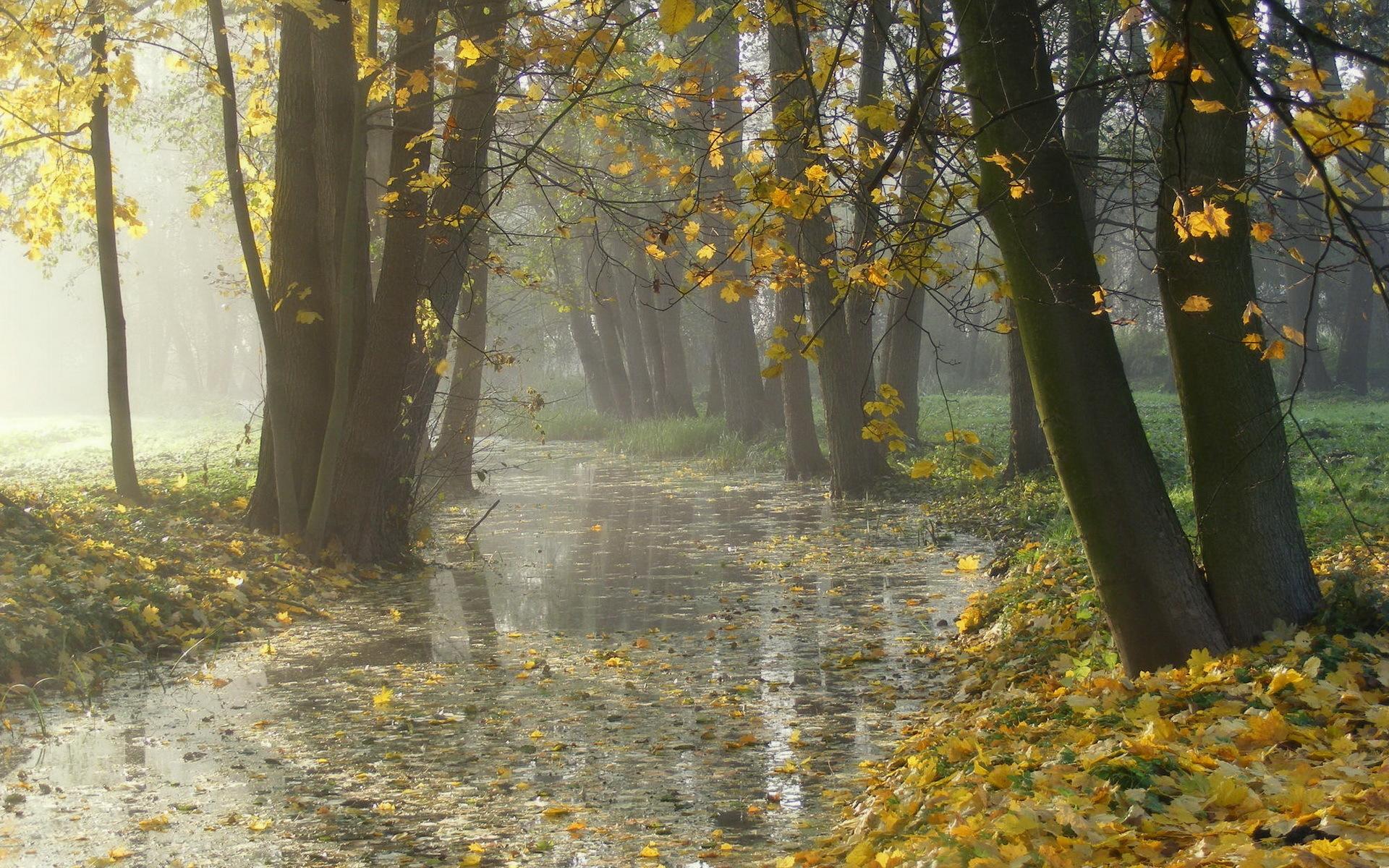 Фото природы осенний дождь
