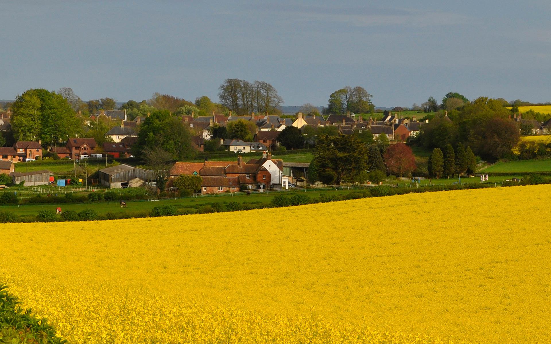 Цветы на селе фото