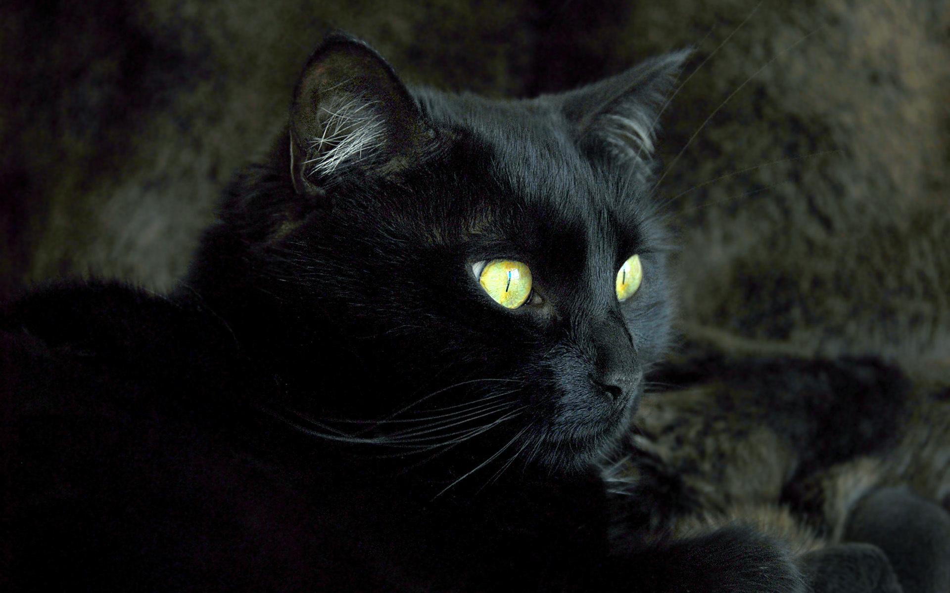 Картинка с кошкой черной
