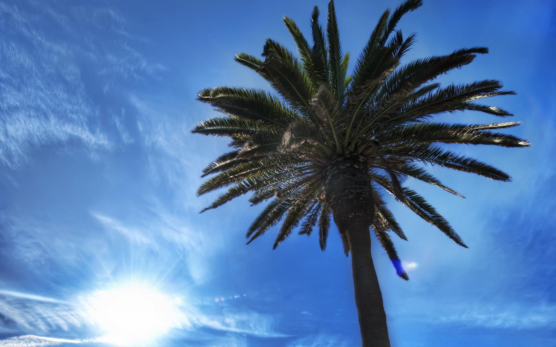 картинка пальмы и солнца милей важно, забыли фотокамеру