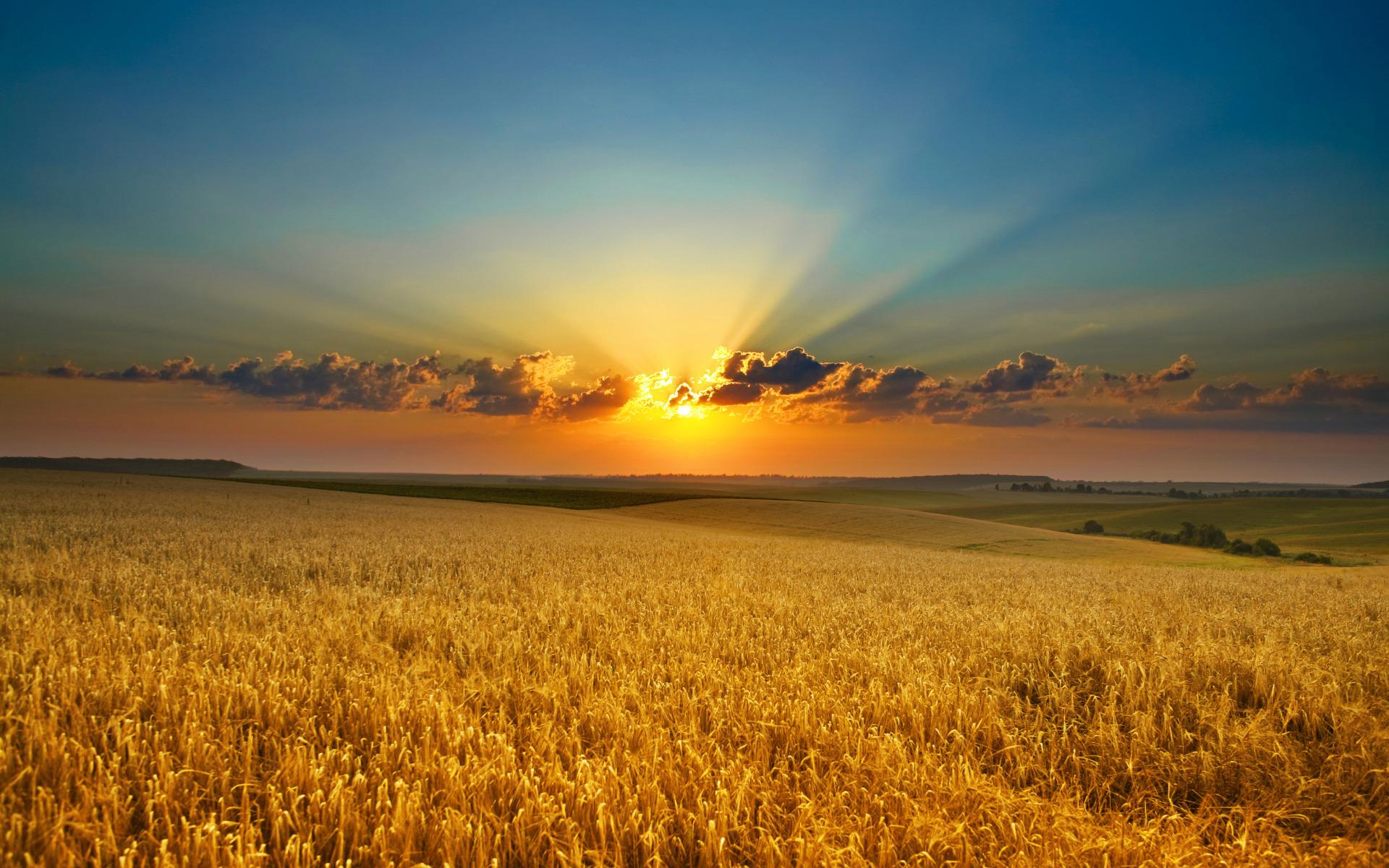 комплекс восход солнца в поле фото хороши