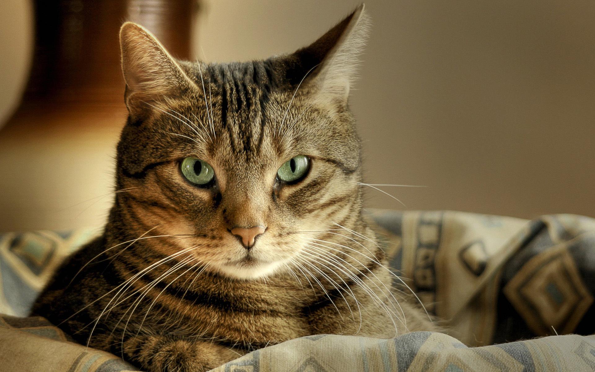 Картинки кошки, прощаемся