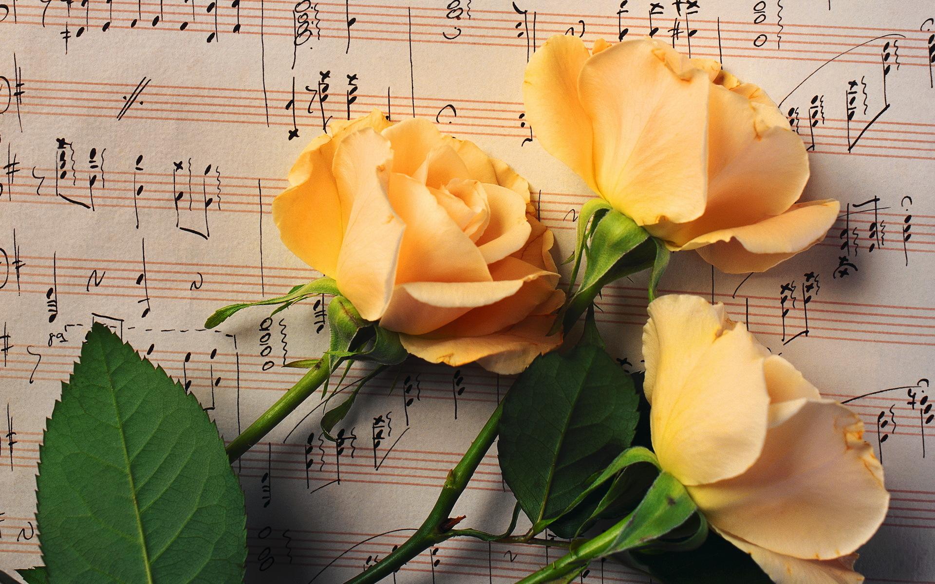 Нежные, цветы красивые открытки
