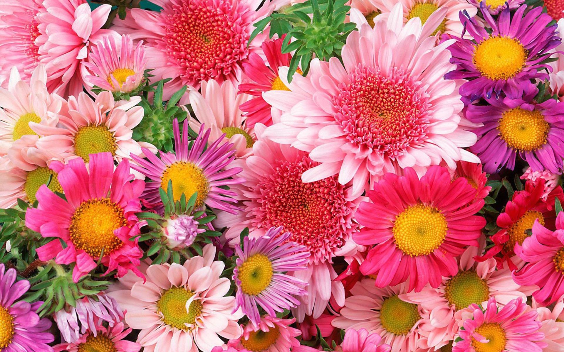 Картинки поздравления, открытка с крупными цветами