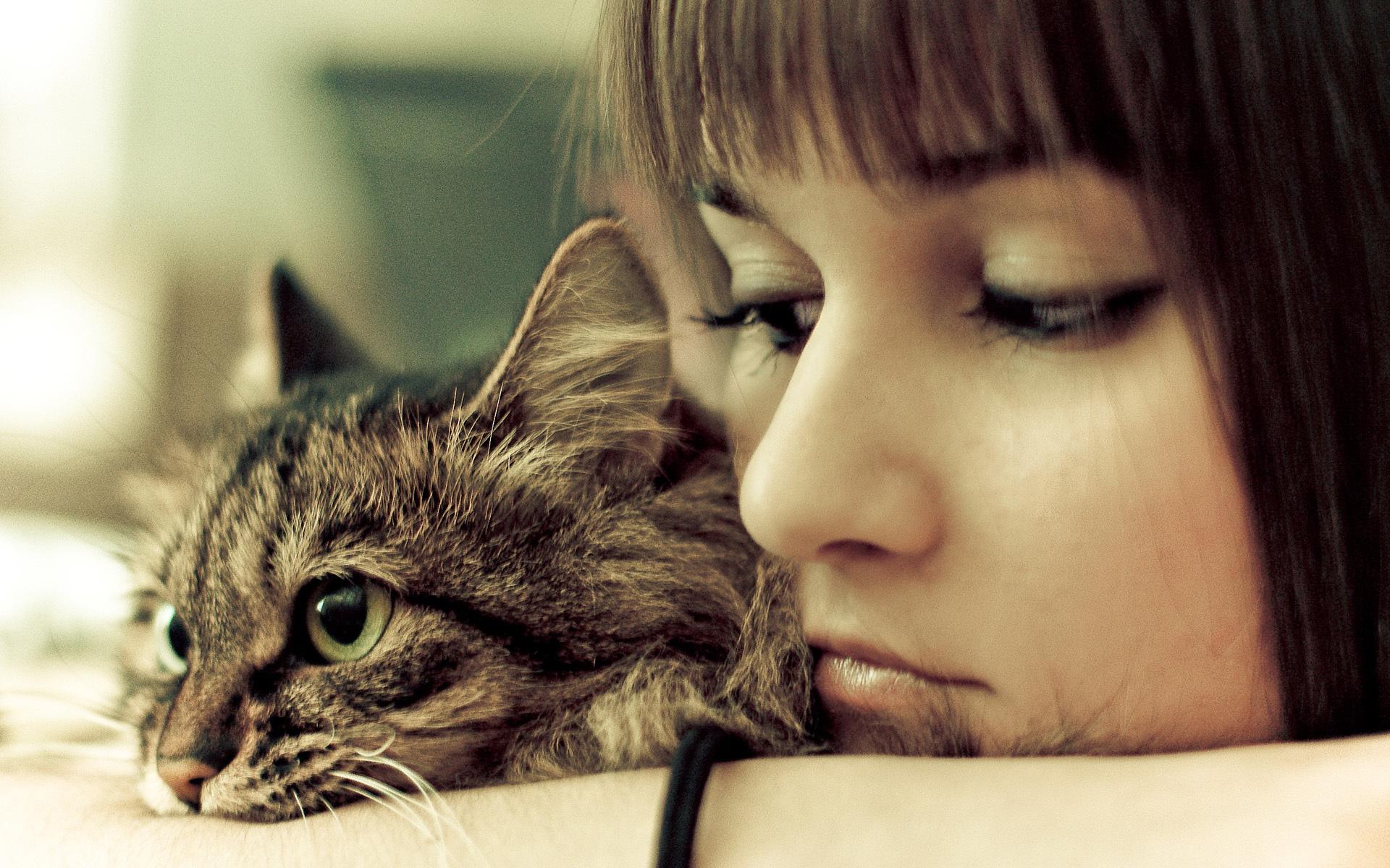 девушка котенок лицо взгляд  № 3597563 загрузить