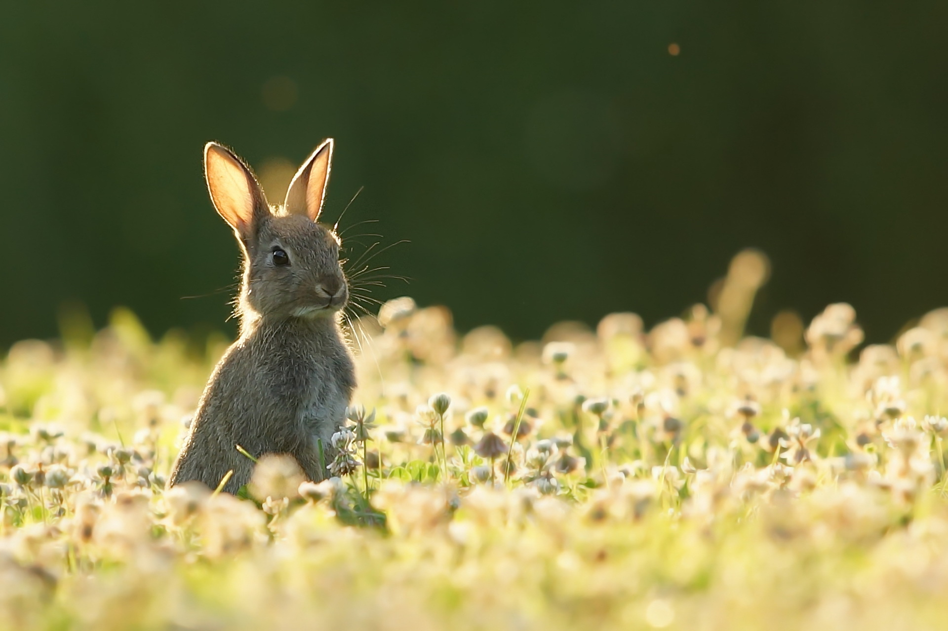 кролик девушка природа животное  № 1594133 без смс