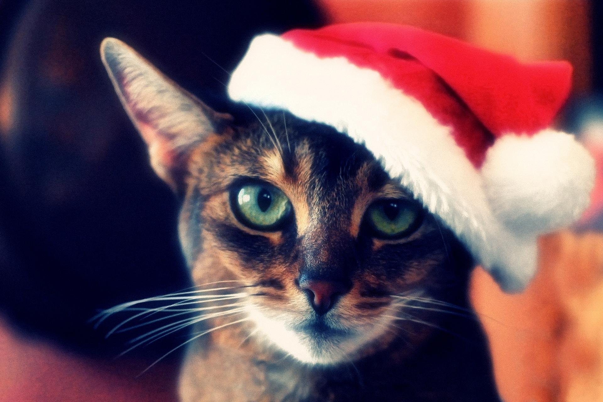 фото котиков в шапочках новогодних это целый