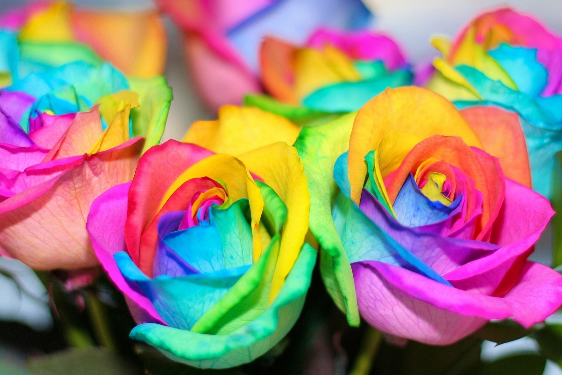 цветы самые яркие картинки этого