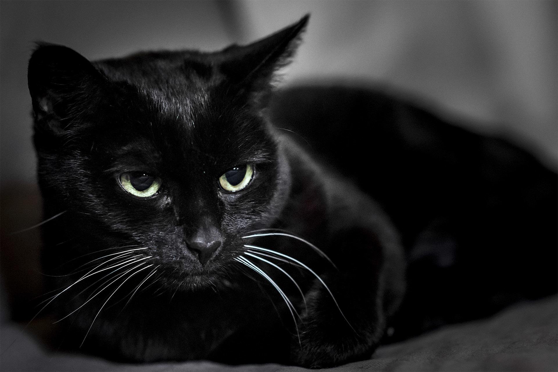 Своими руками, картинка с кошкой черной