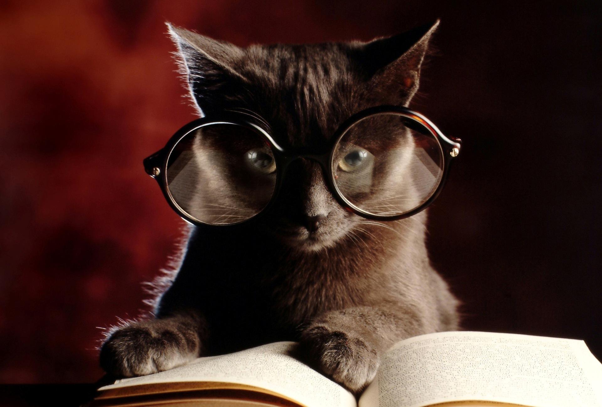 Открыток создать, смешные картинки кошек в очках