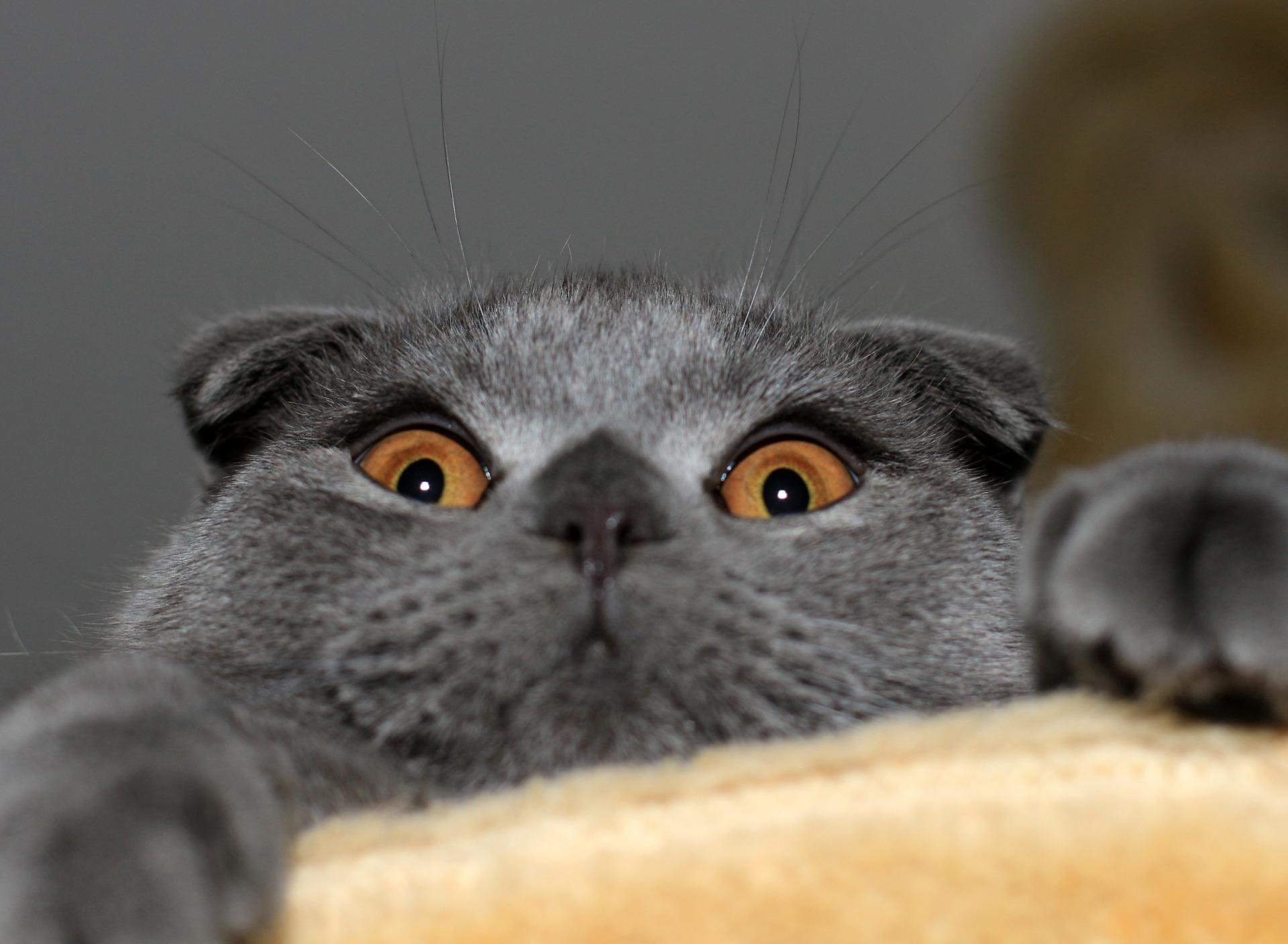 Картинки смешные коты на рабочий стол