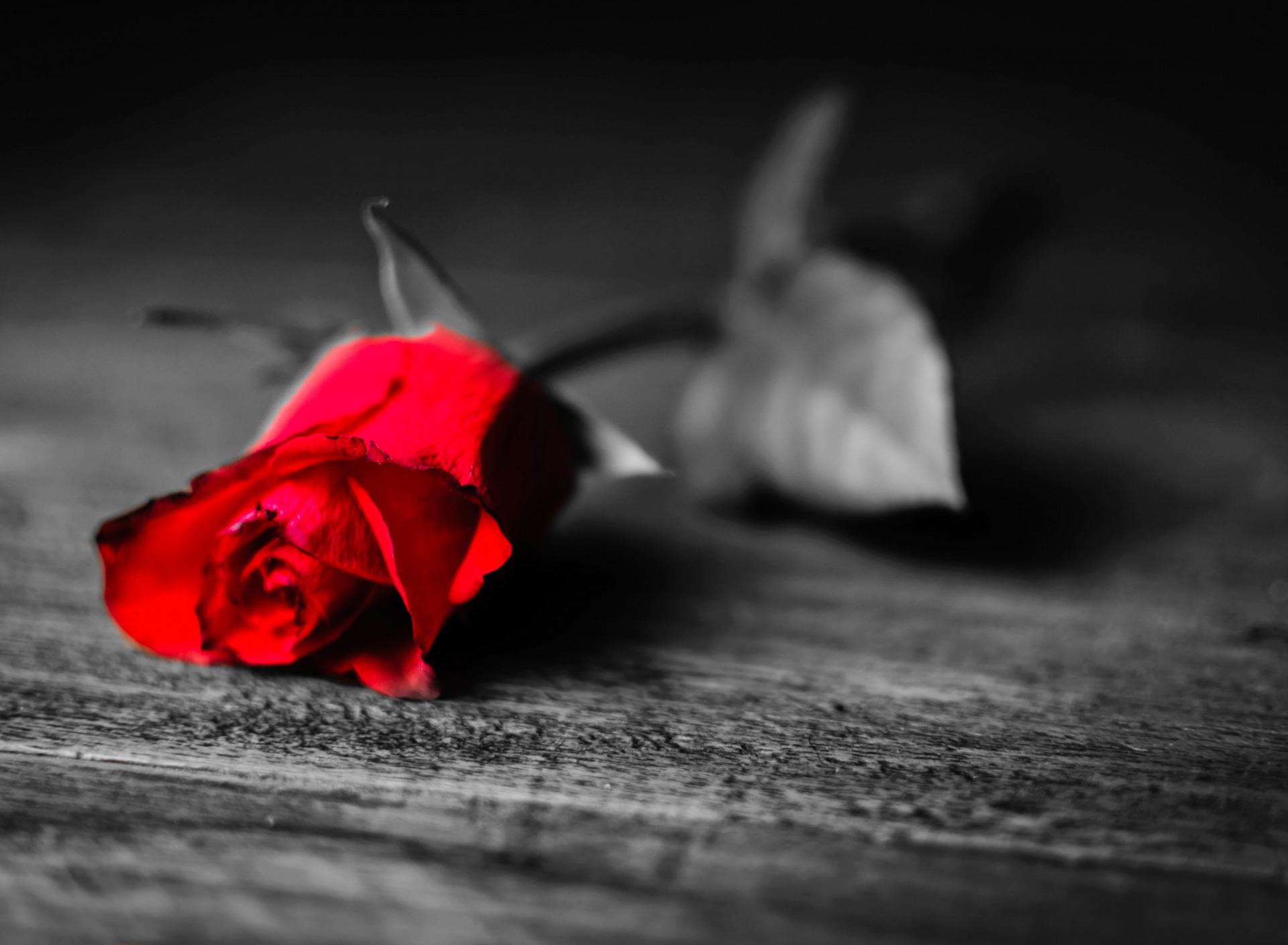 картинки одиночества сердец дмитрия