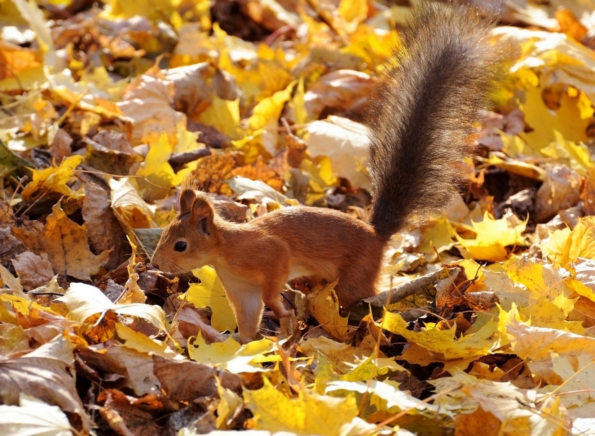 красотка, осень в жизни животных картинки три хлеба испеклись