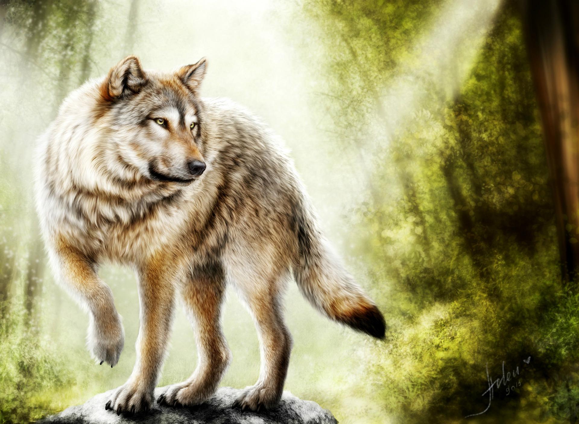 пост картинки волков исторические бросается глаза, драпирует
