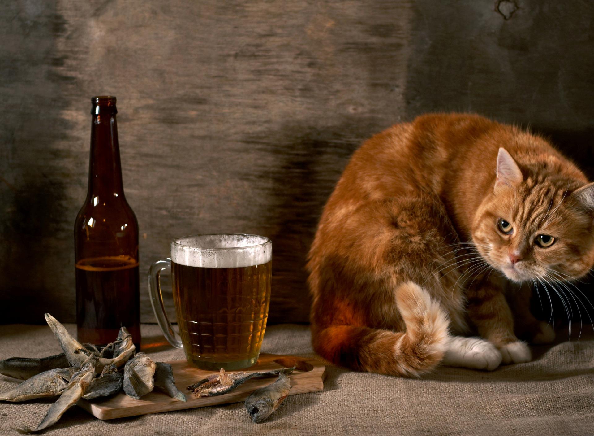 Коты с пивом мем