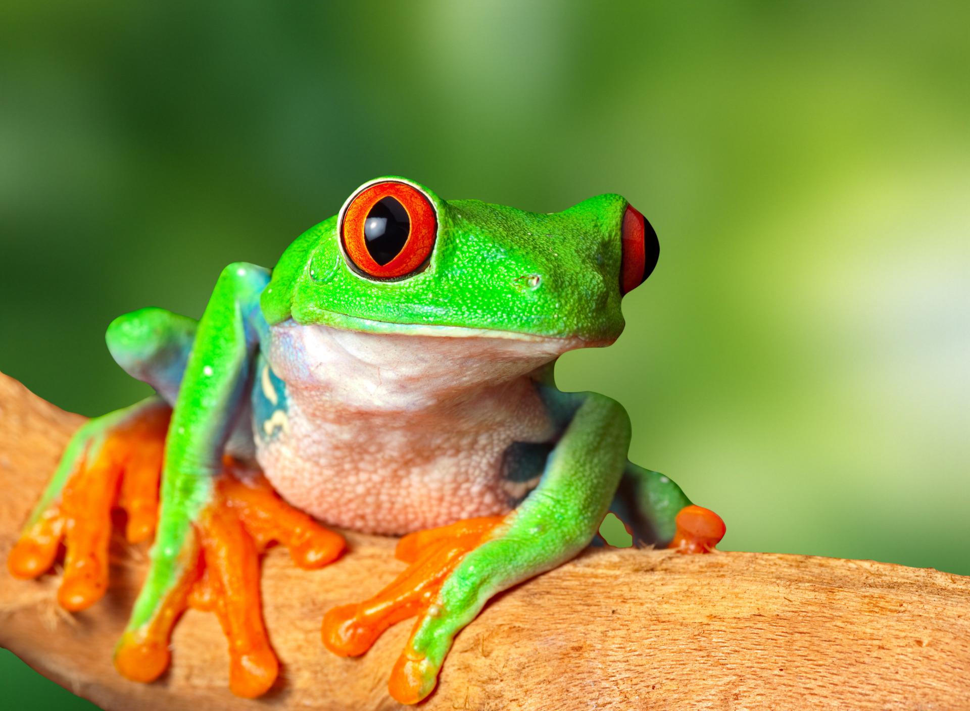 Картинка красивые лягушки