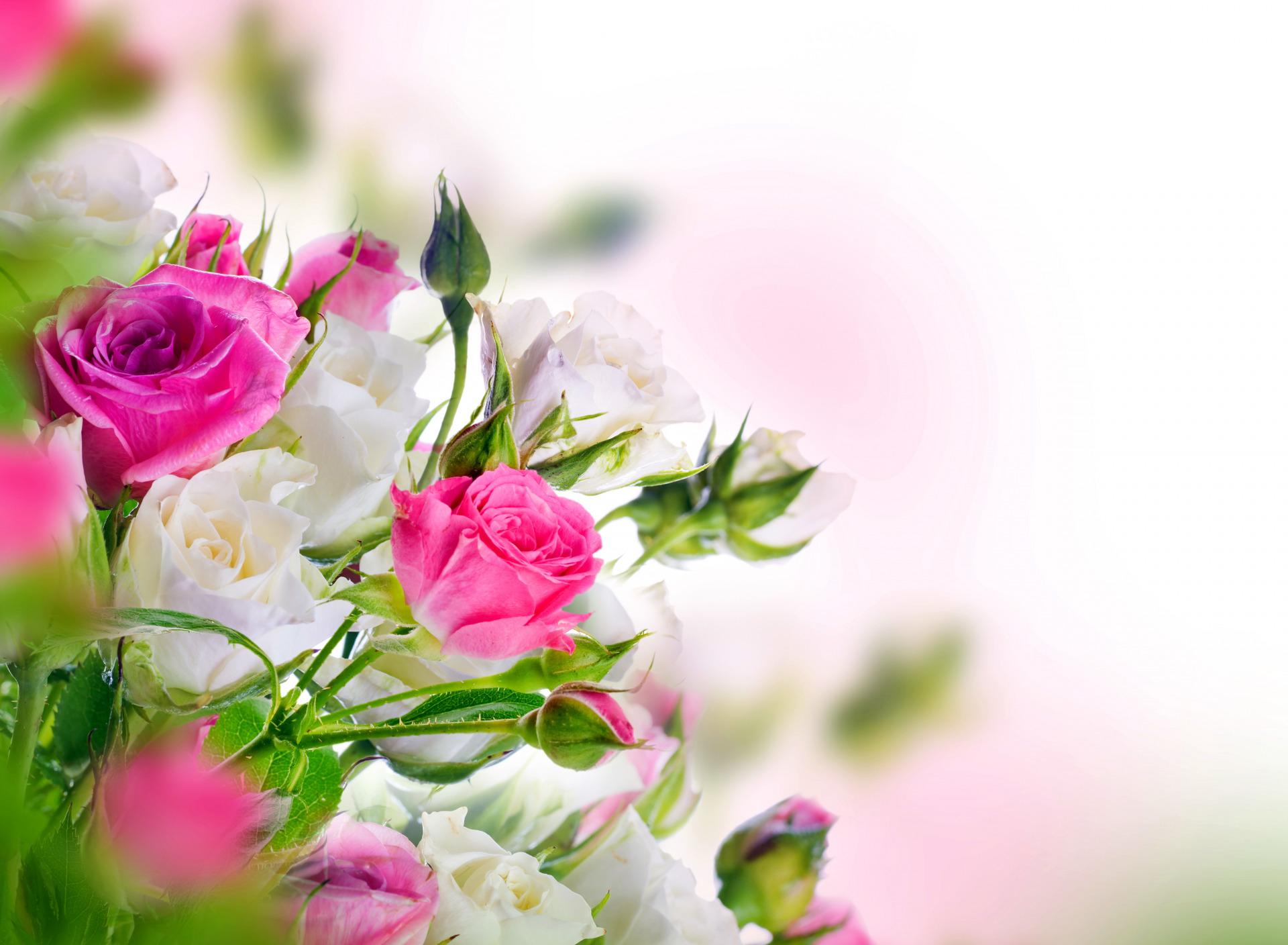 Красивые открытки с цветочками 290