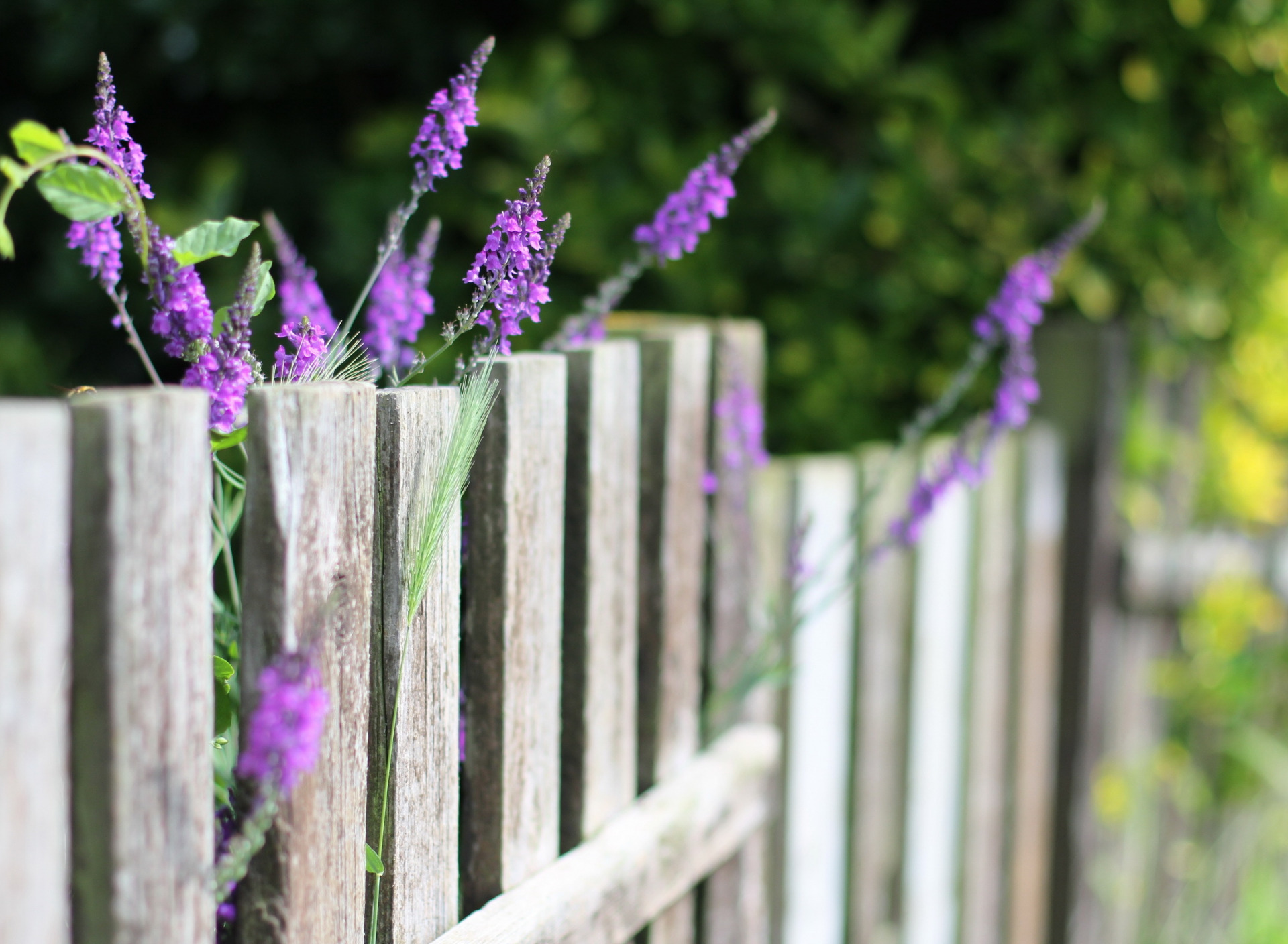 картинки на рабочий стол забор в цветах