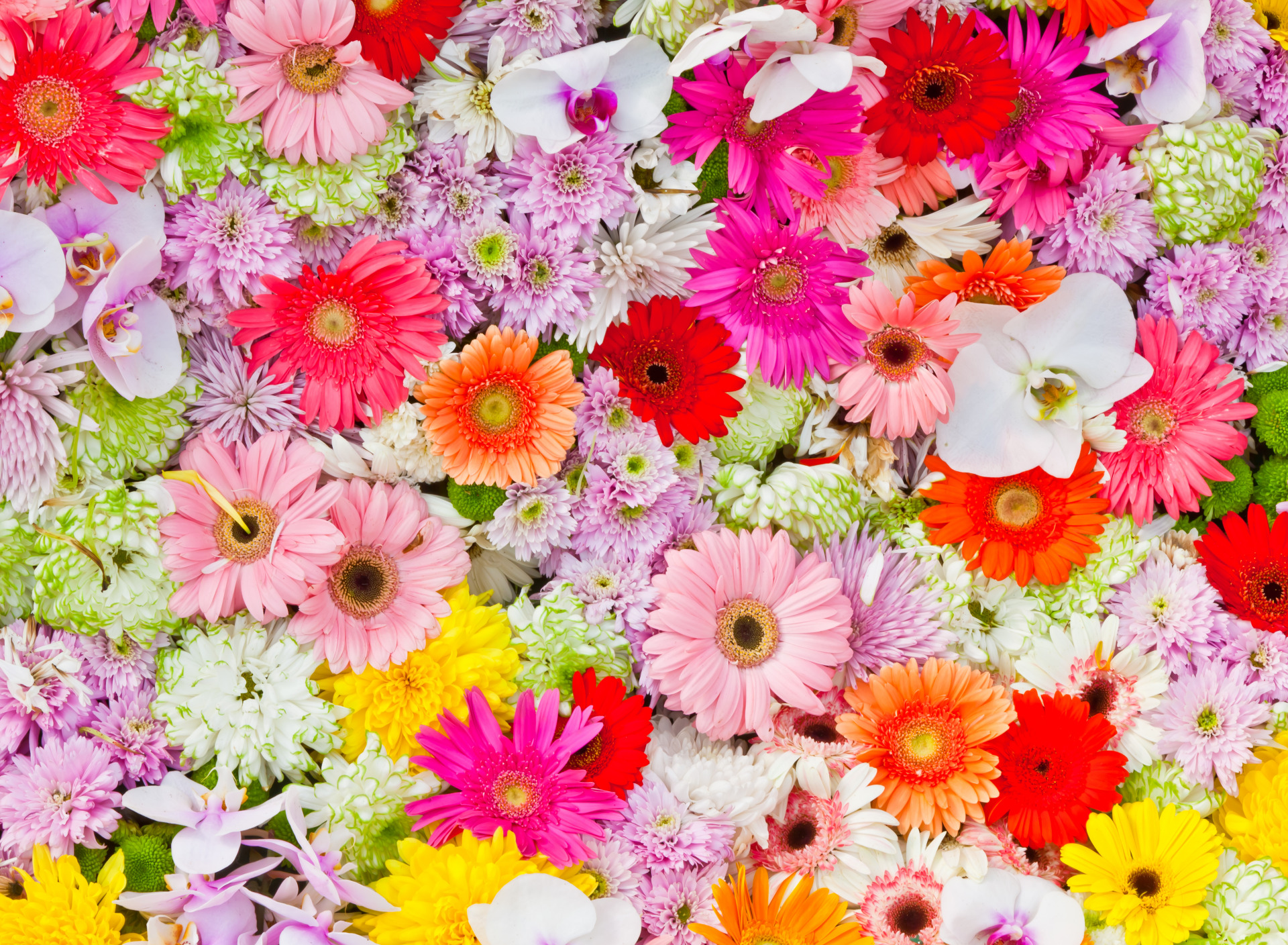 желании можем цветы самые яркие картинки более