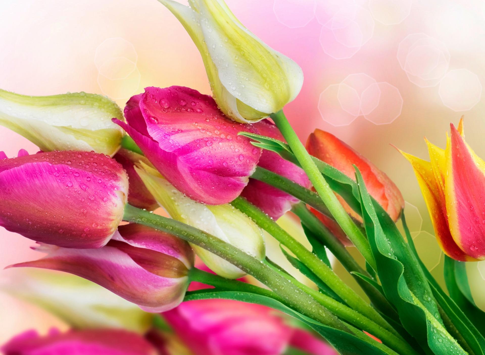 виртуальные открытки тюльпаны хочется выделиться серой
