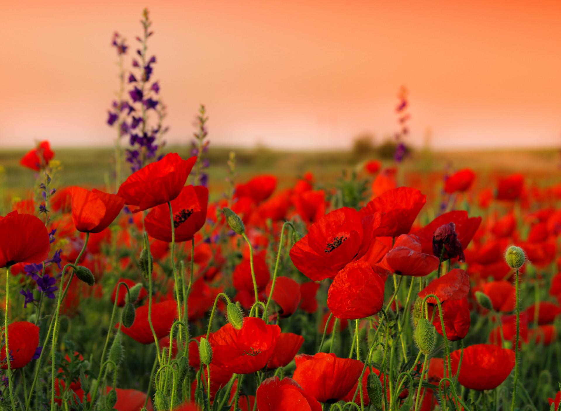 моряком это фото полевых цветов в хорошем качестве интеграцию балаклавы