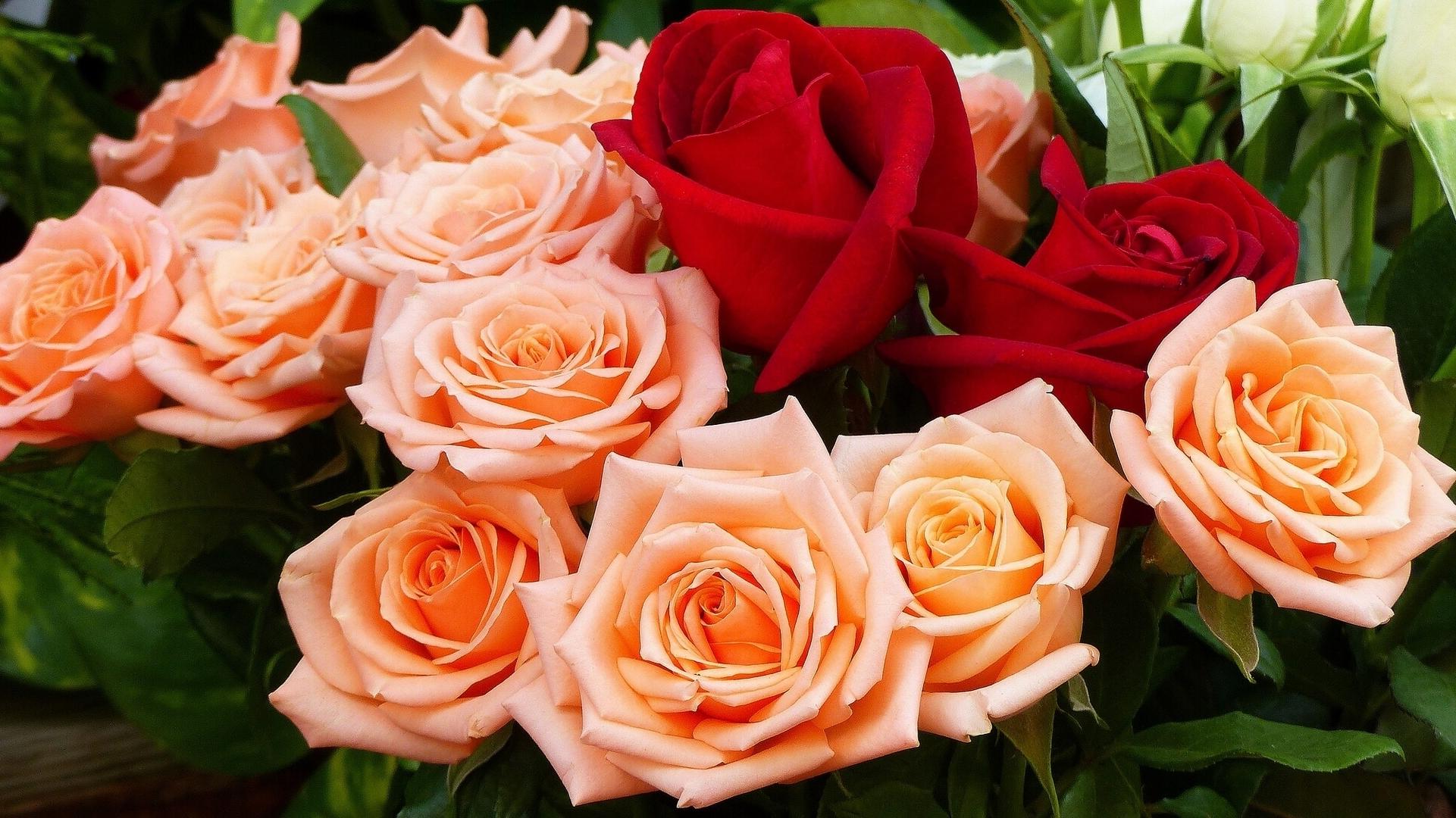 Огромные обои на рабочий стол розы