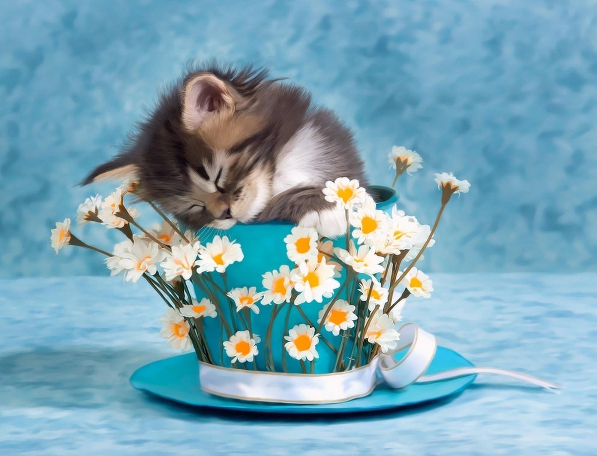 своей жизни котенок доброе утро фото тара