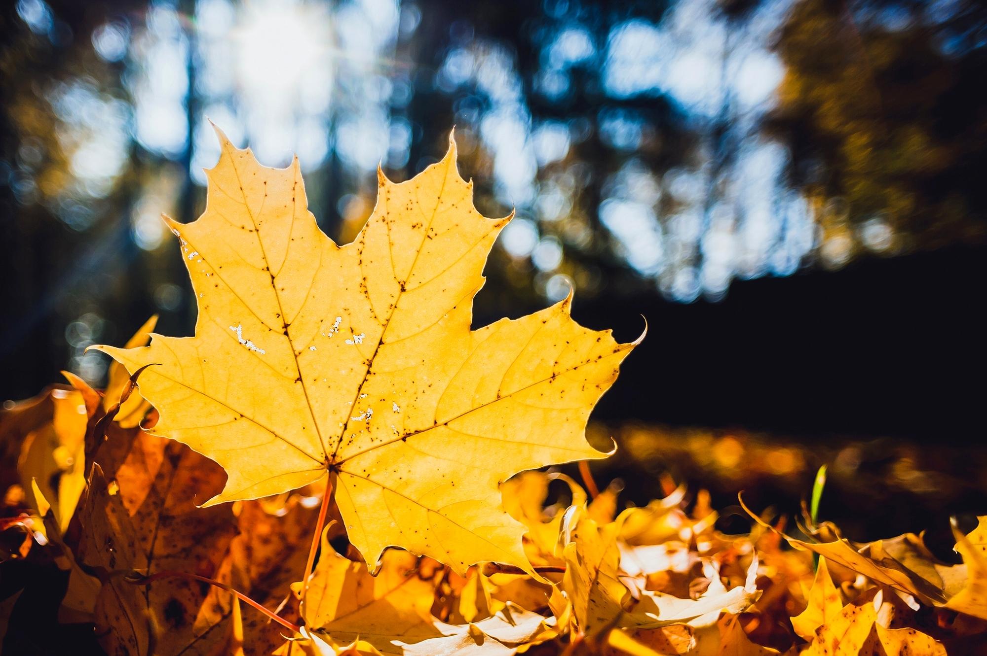 Опавшие желтые листья  № 1359304 загрузить