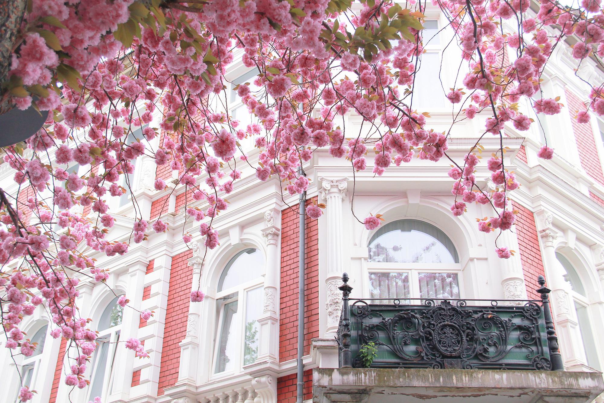 Скачать обои здание, франция, france, архитектура, цветение,.