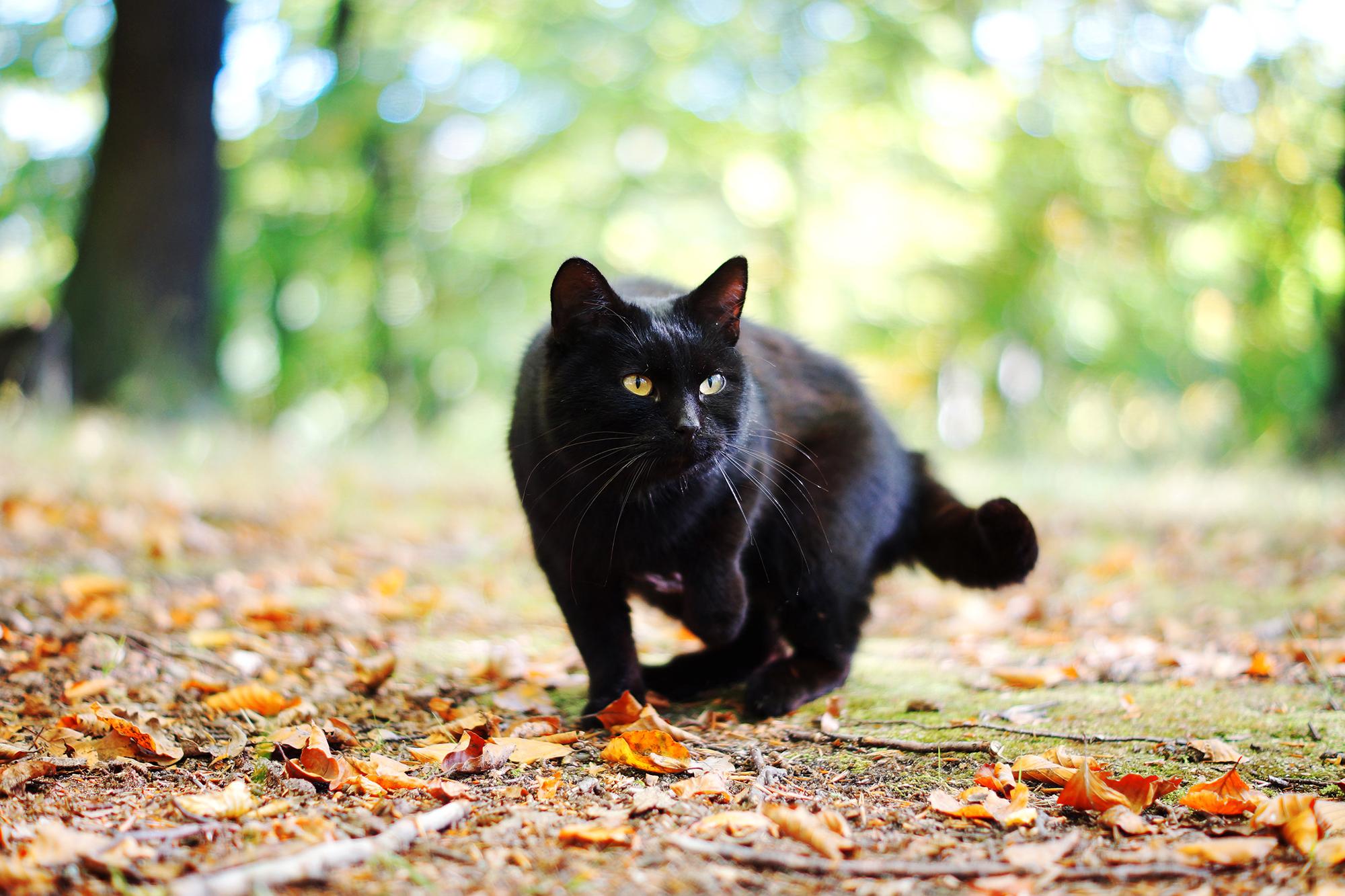 природа животные кот котенок черный  № 654378 без смс