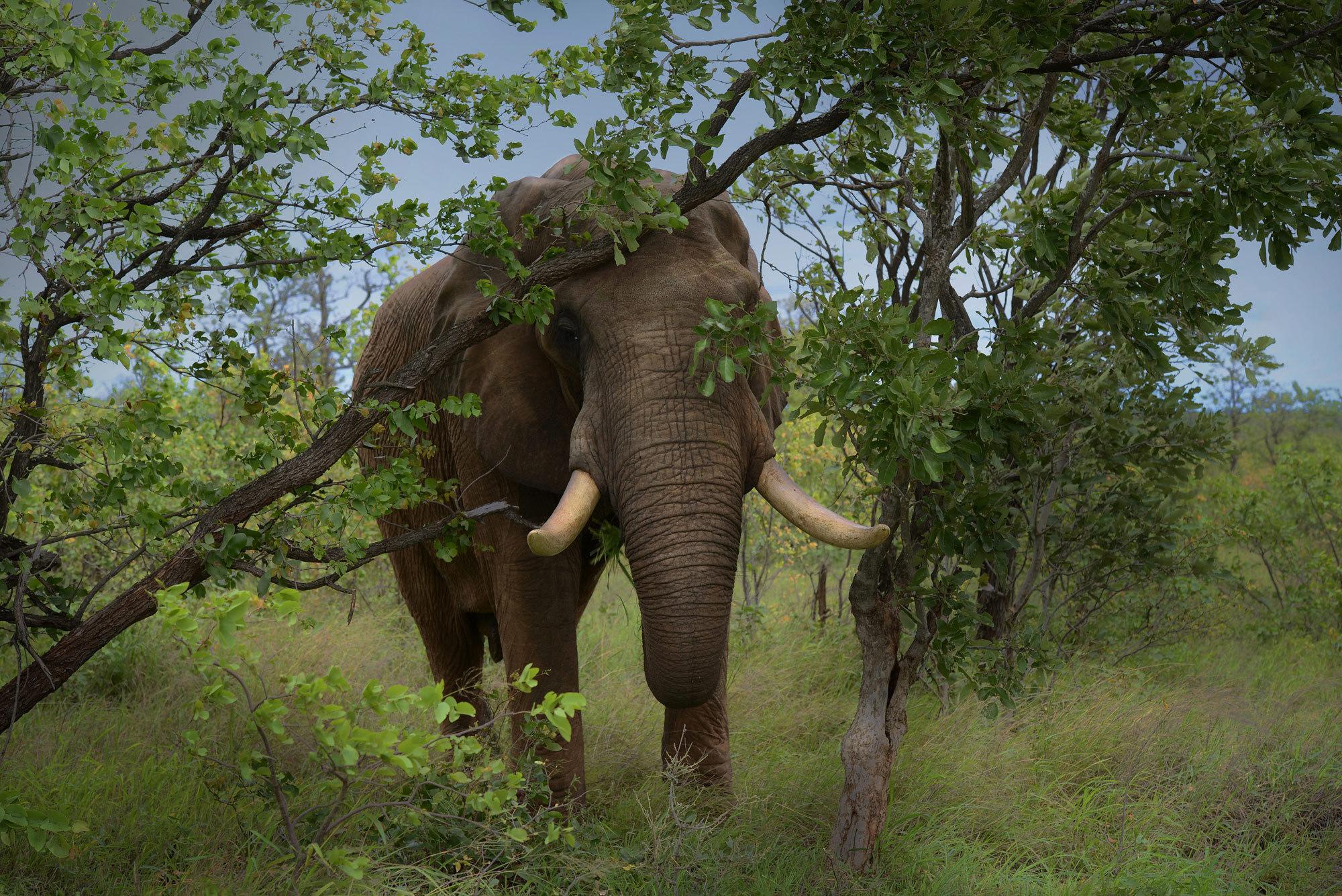 картинки слоны в джунглях омбре смотрелось